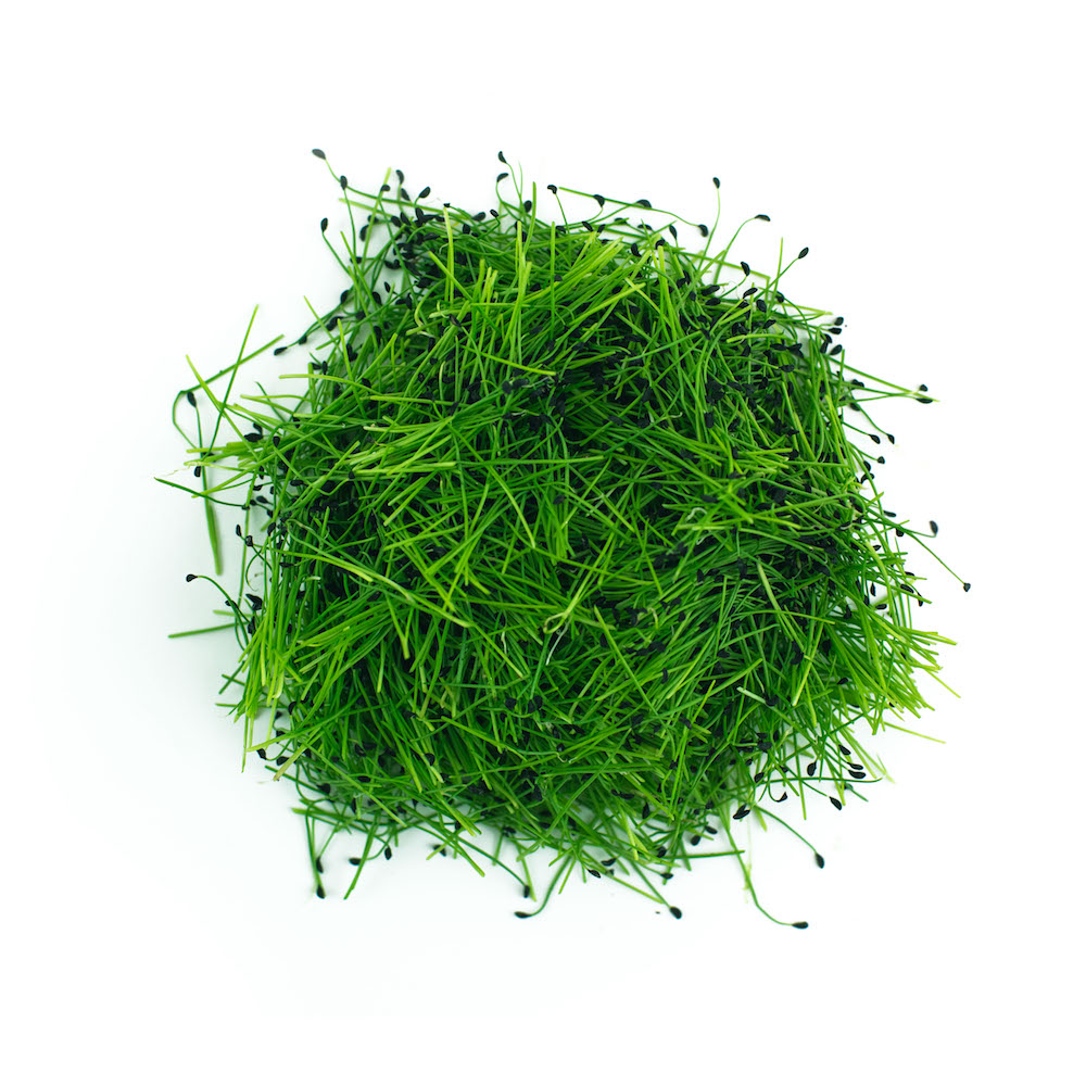 Scallion Microgreen
