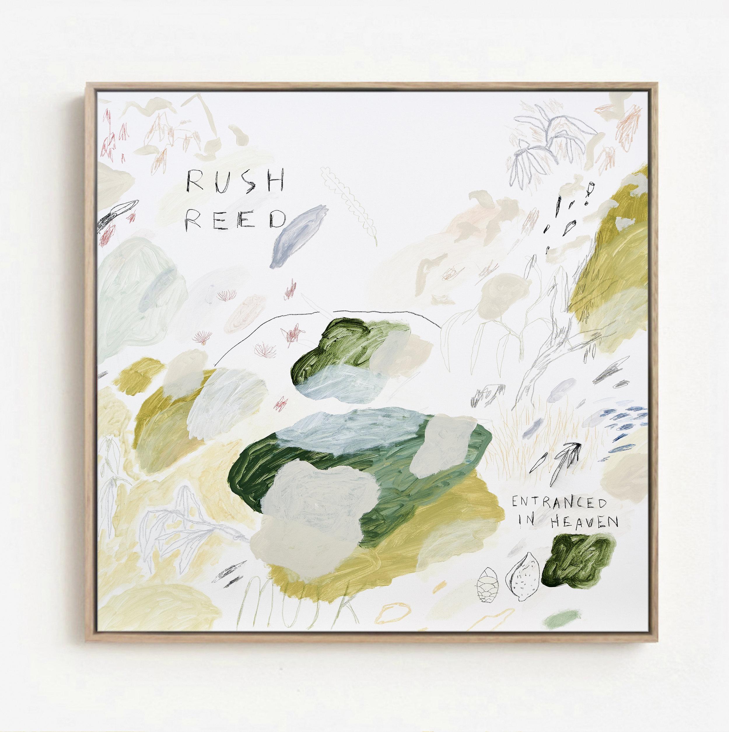 Rush Reed Framed Otomys.jpg
