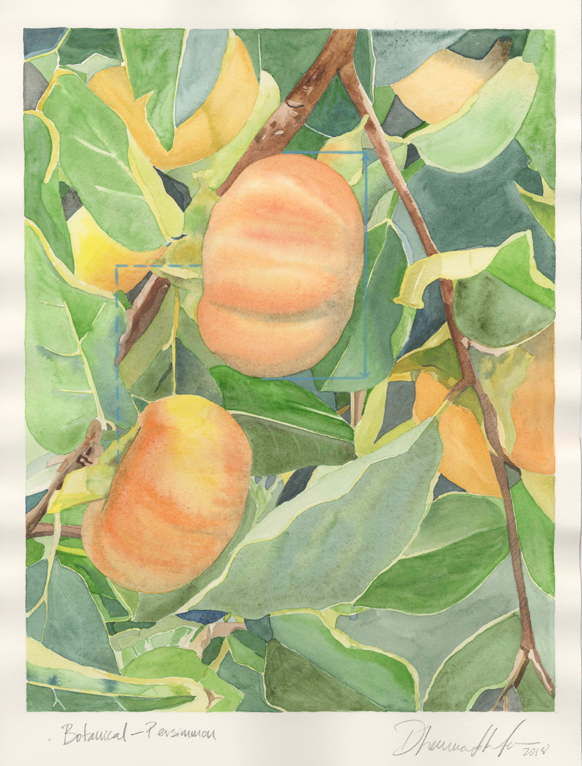 Botanical—Persimmon