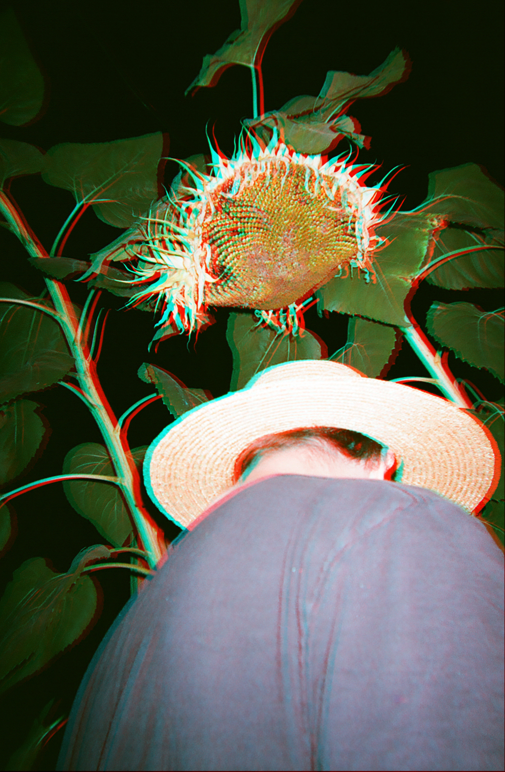 Sunflower , 2017