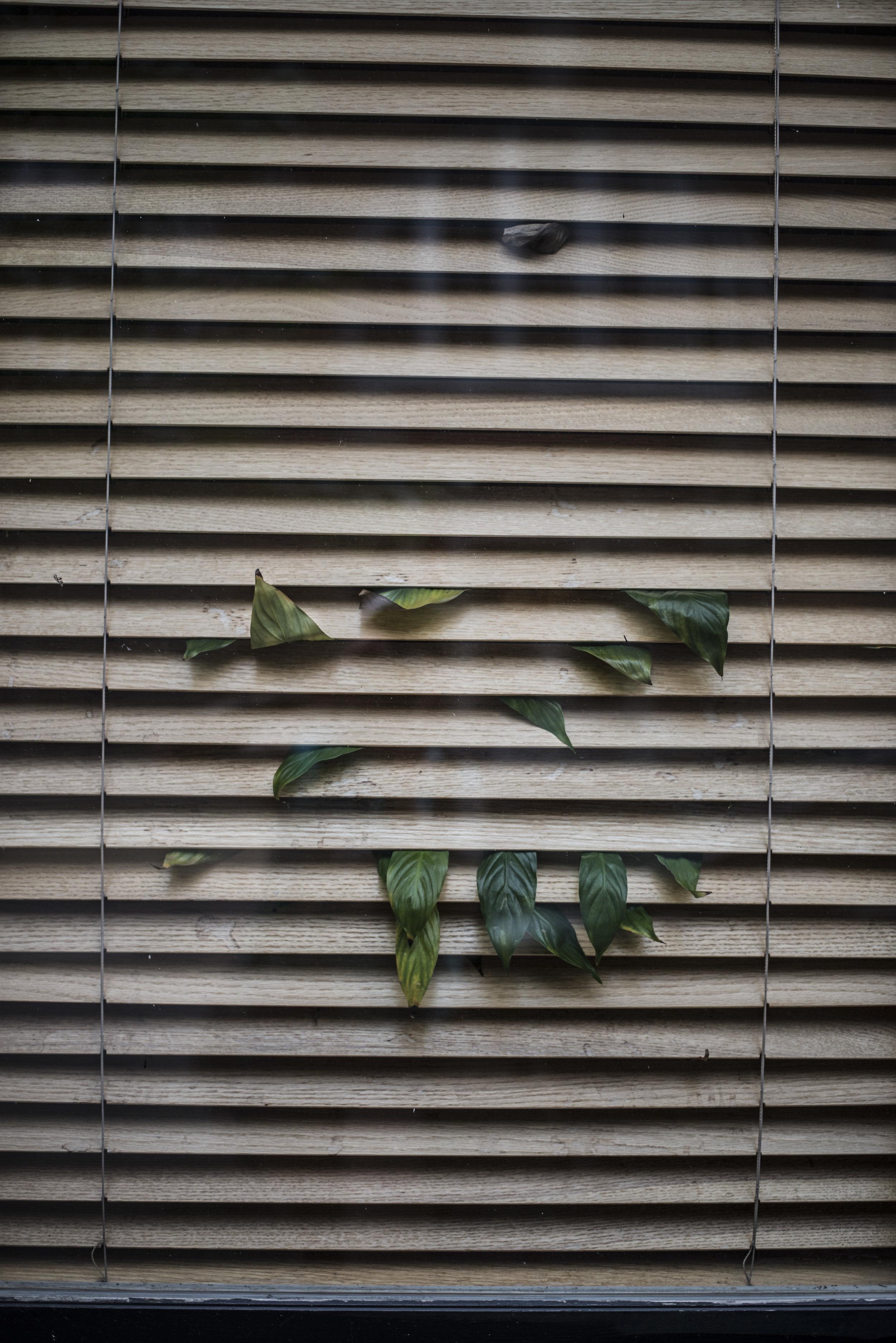 Window Plant , 2017