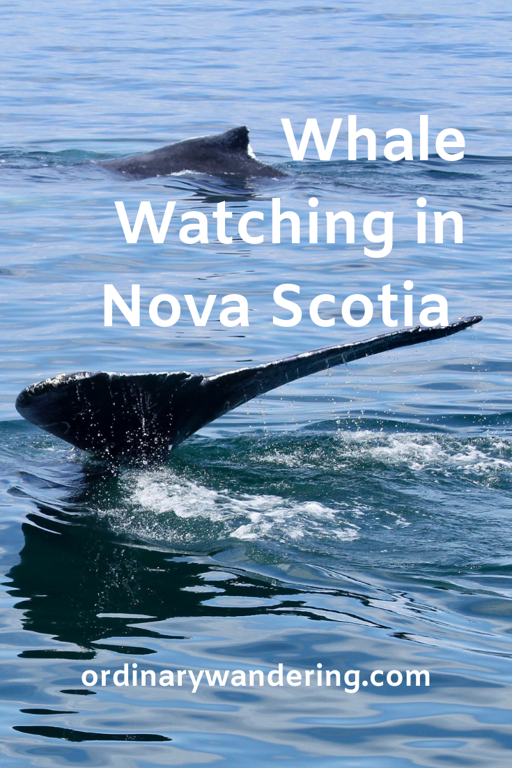 Whale Watching in Nova Scotia.png