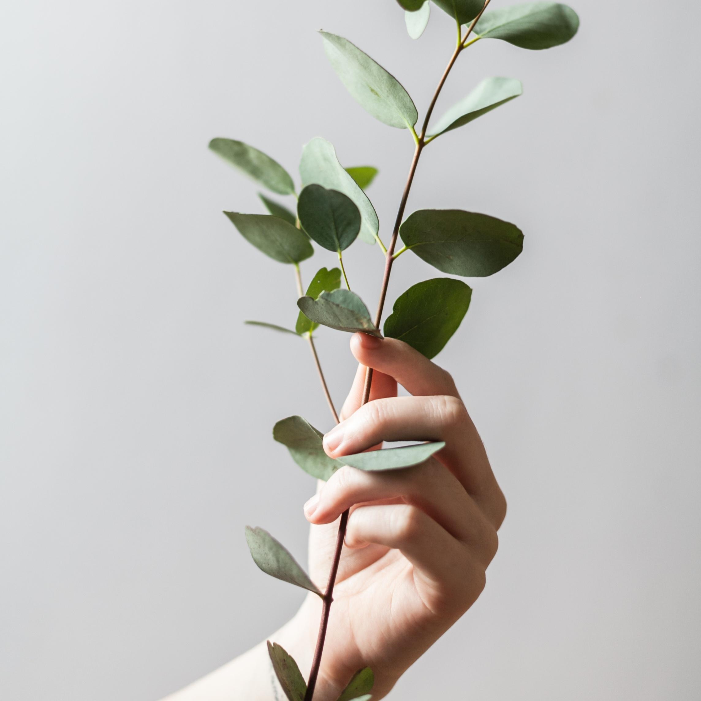 Plant music meditation? -