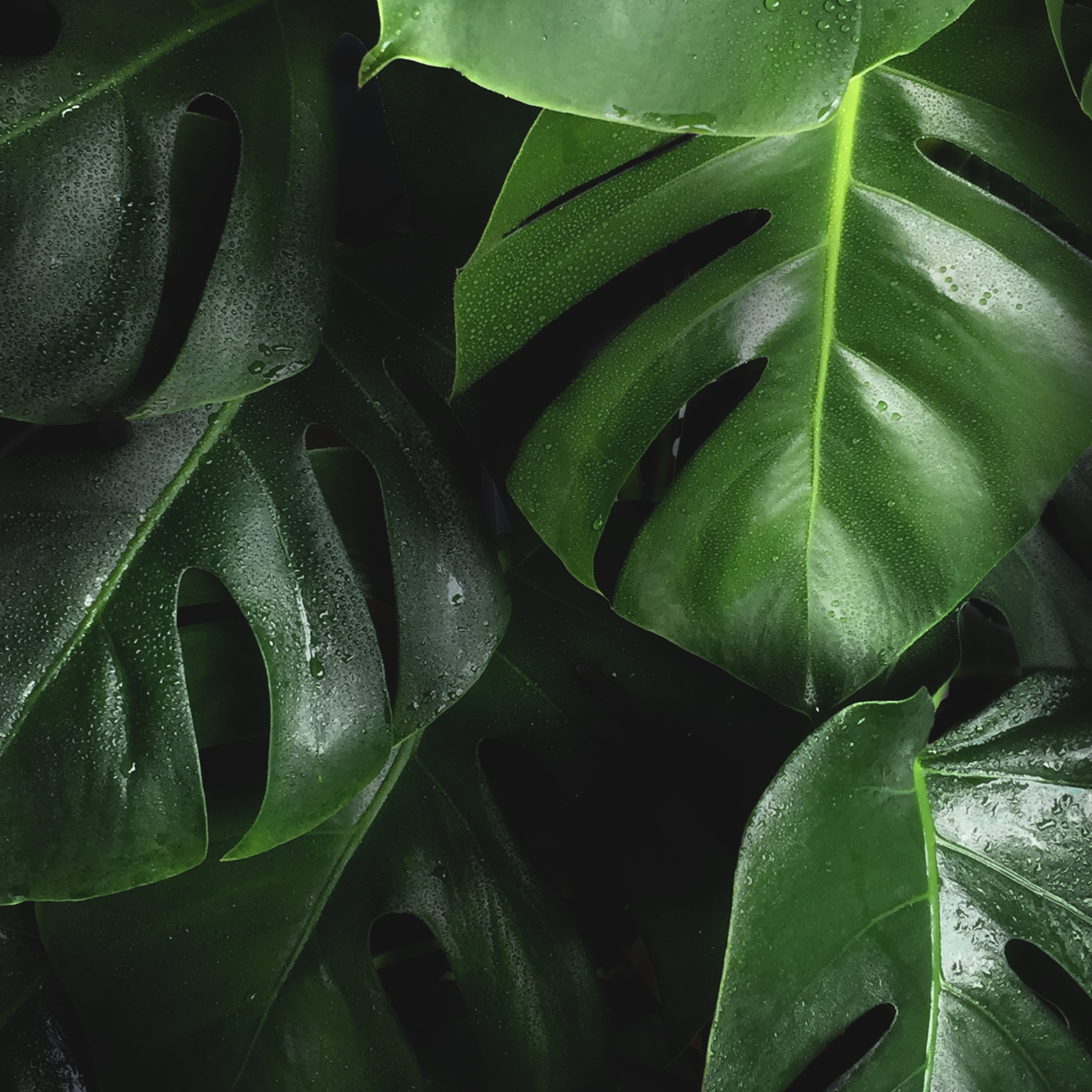 """Creating music with plants is a joyous new reality - """"We've experienced a lot of correlations between shifts in energy in a room and a shift in the data that's coming from the plant. We look to environments where people are engaged in physical activities, like yoga or meditation or breath work…"""" - Joe PatitucciRead More"""