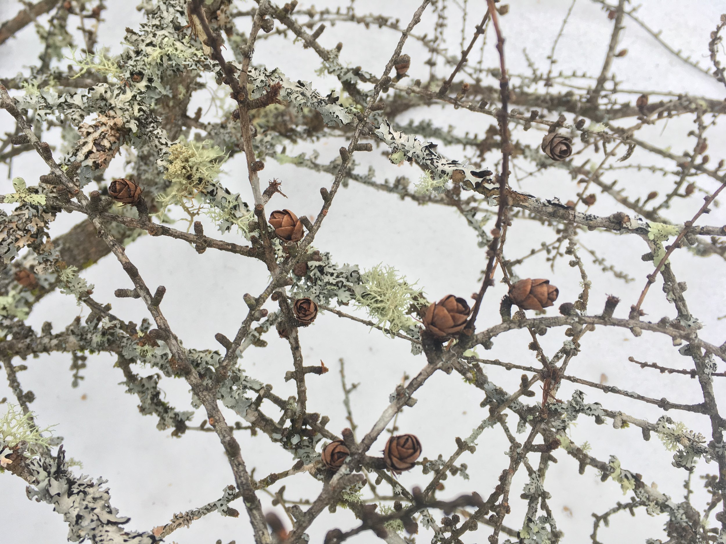In winter, there are still beautiful local materials to use in floral designs