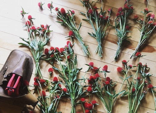 Curious about our flowers? -