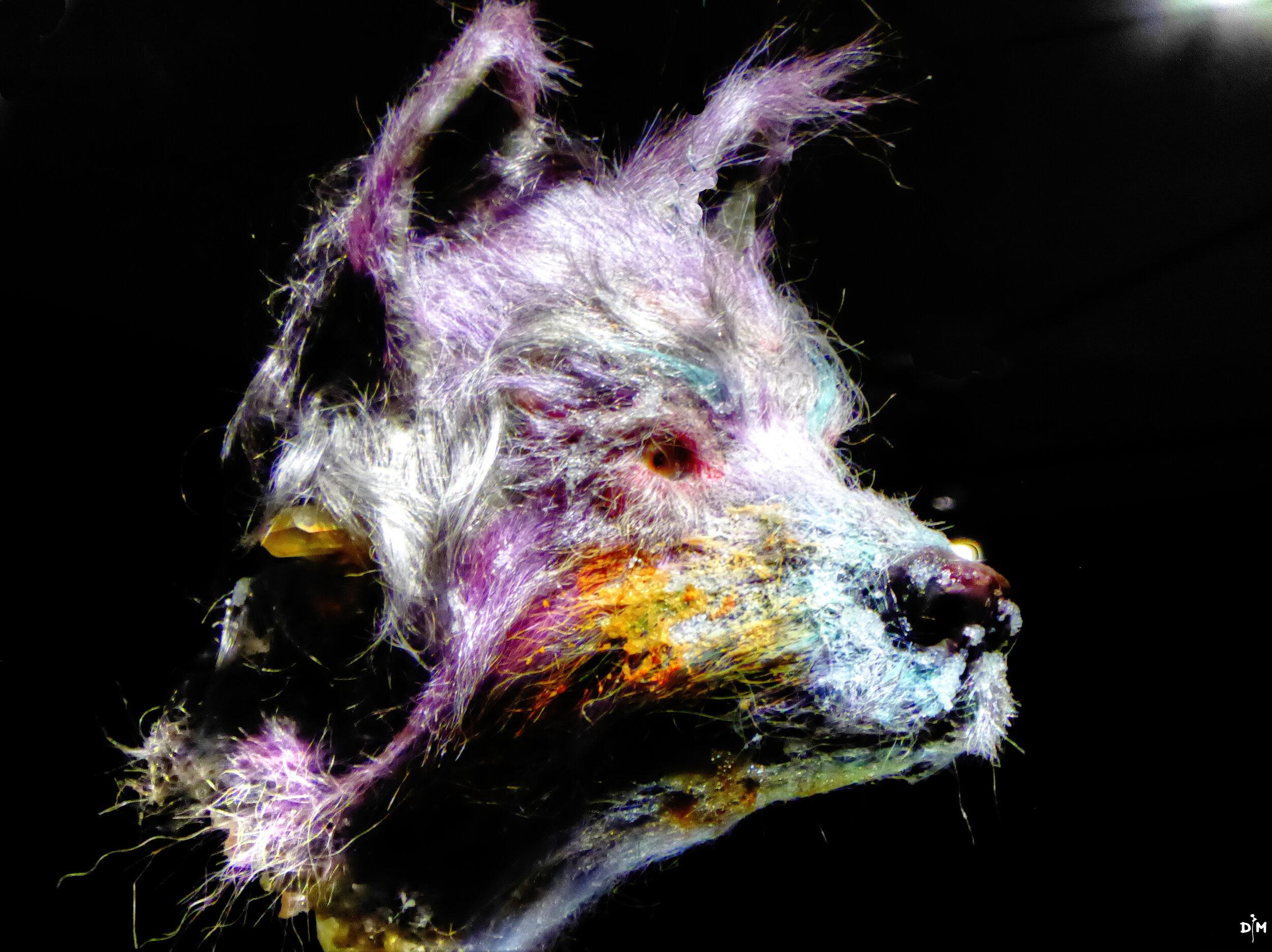 Wolf Head .jpg