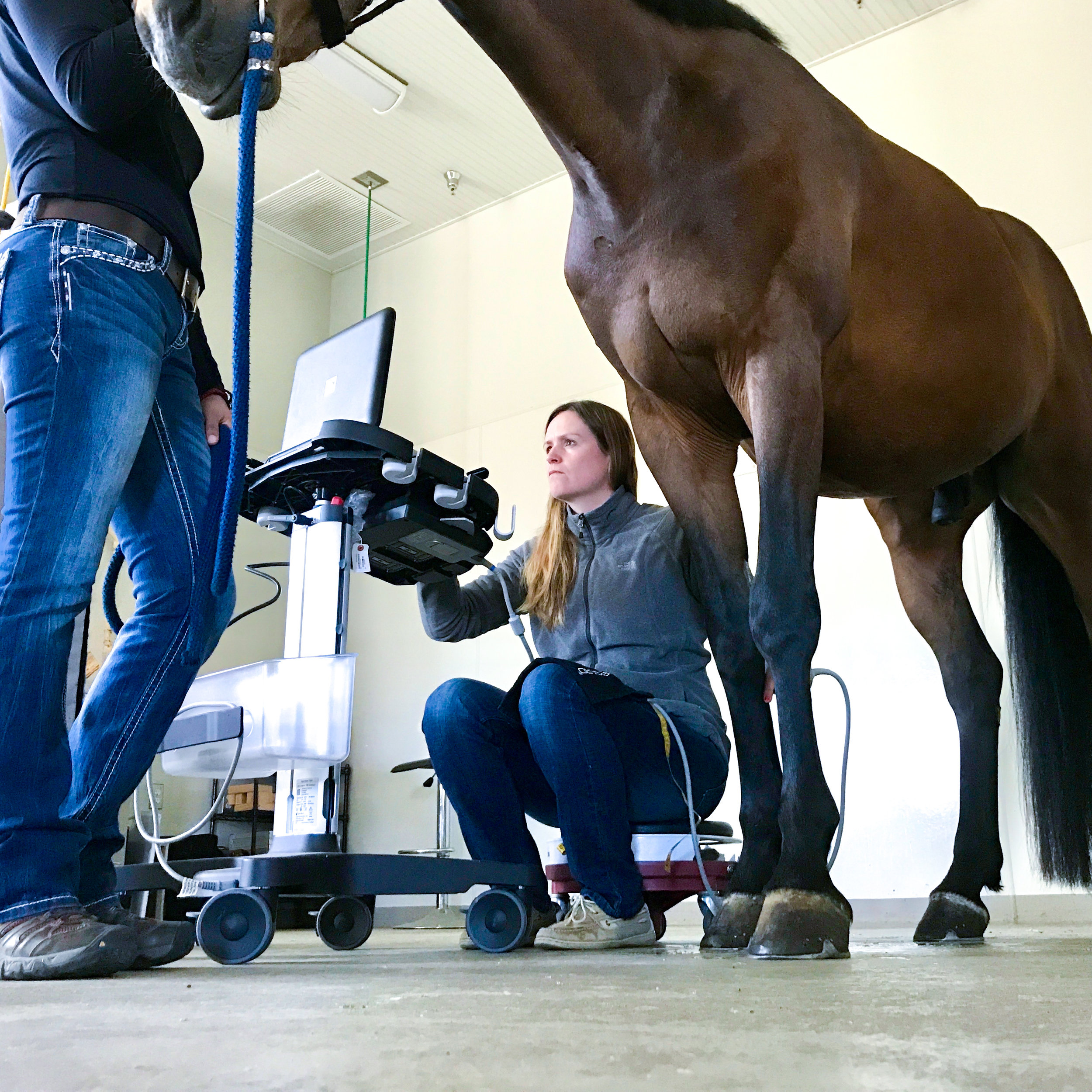 EquineUltrasonography.jpg