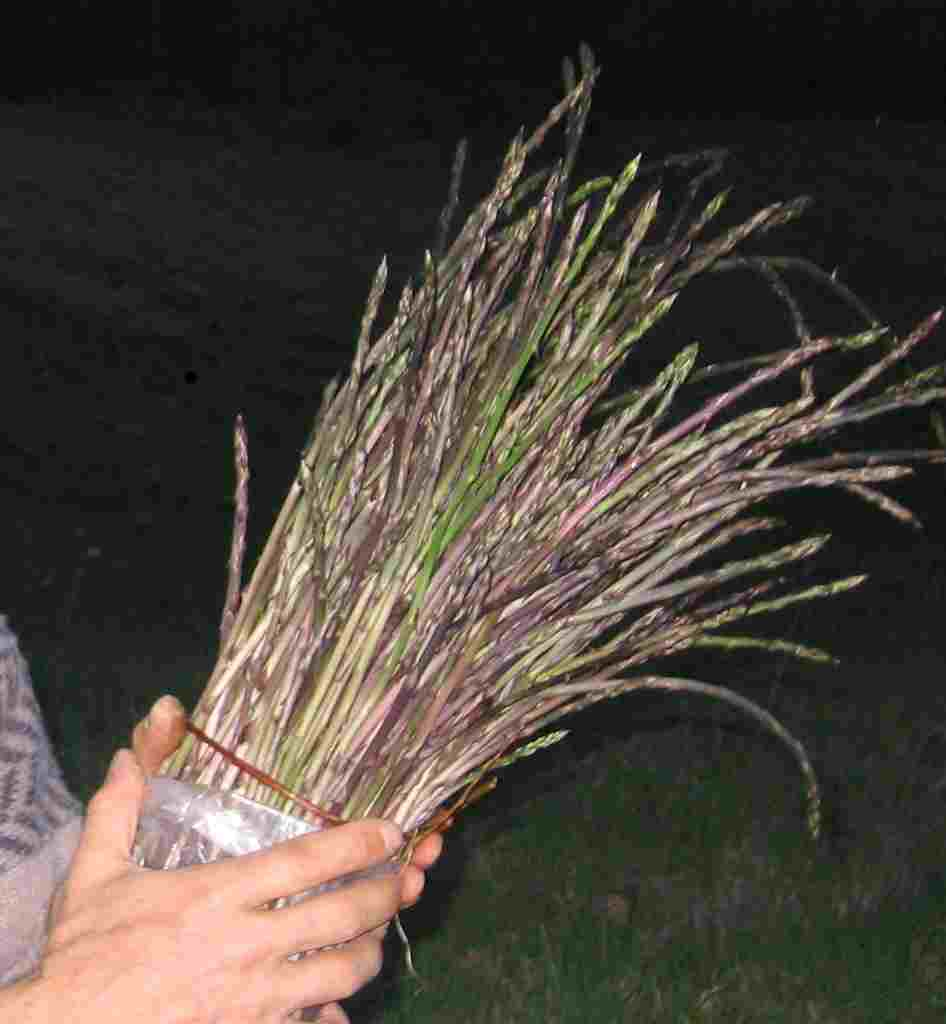 asparago2.jpg