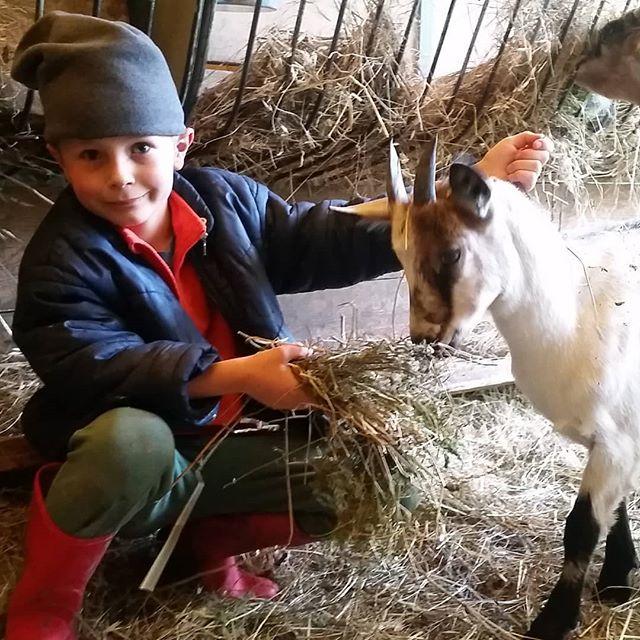 Milky the goat, Fa's buddy