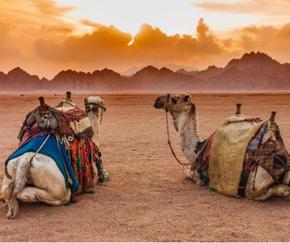 MARRAKECHtwo-camels-FACEBOOK.jpg