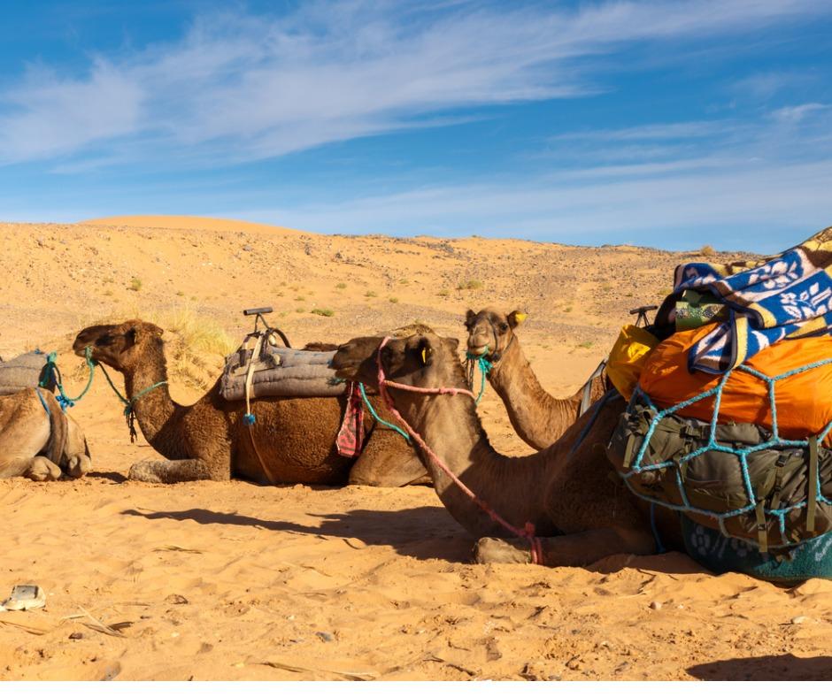 MARRAKECHcamels-in-the-desert-FACEBOOK.jpg