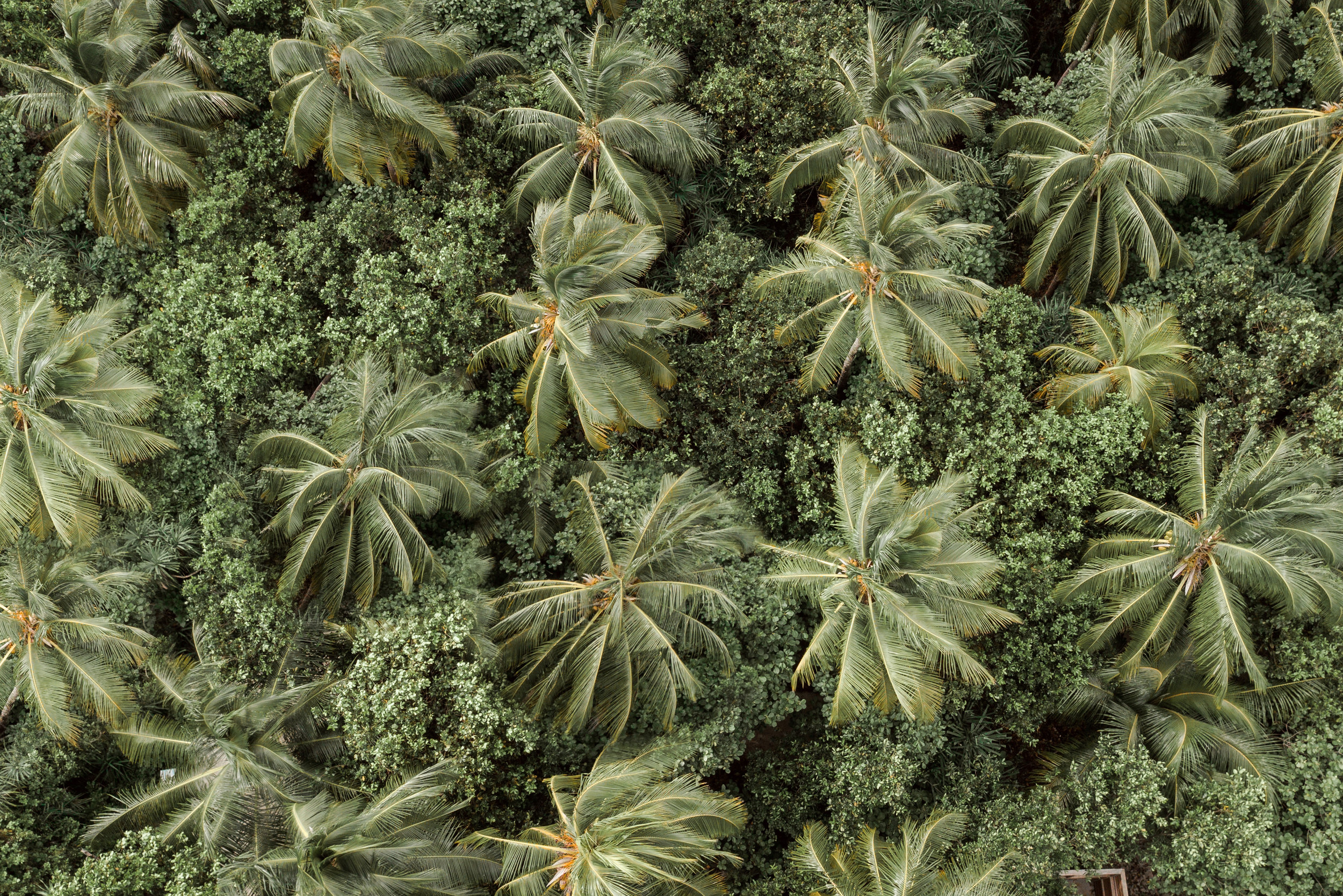 Palm tree tops for slideshow carousel.jpg