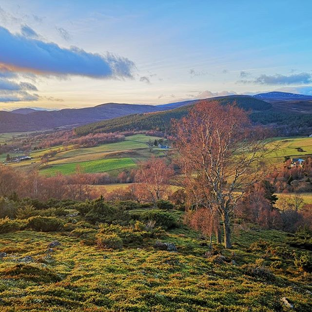 So far the winter has been very mild at the cottage and we have been enjoying the beautiful evening skies. Here is a view of the cottage (on the far right) from the west lower side of Creag a' Chlamhain hill.  #visitscotland #scottishhighlands #viewscene #viewshots #landscapephotography #explorescotland #scotlandshots #scotlandexplore #lovescotland #scotlandsbeauty #scotland_insta #instascotland #thisisScotland #accommodation #selfcatering #selfcateringaccommodation  #cairngorms #cairngormsnationalpark