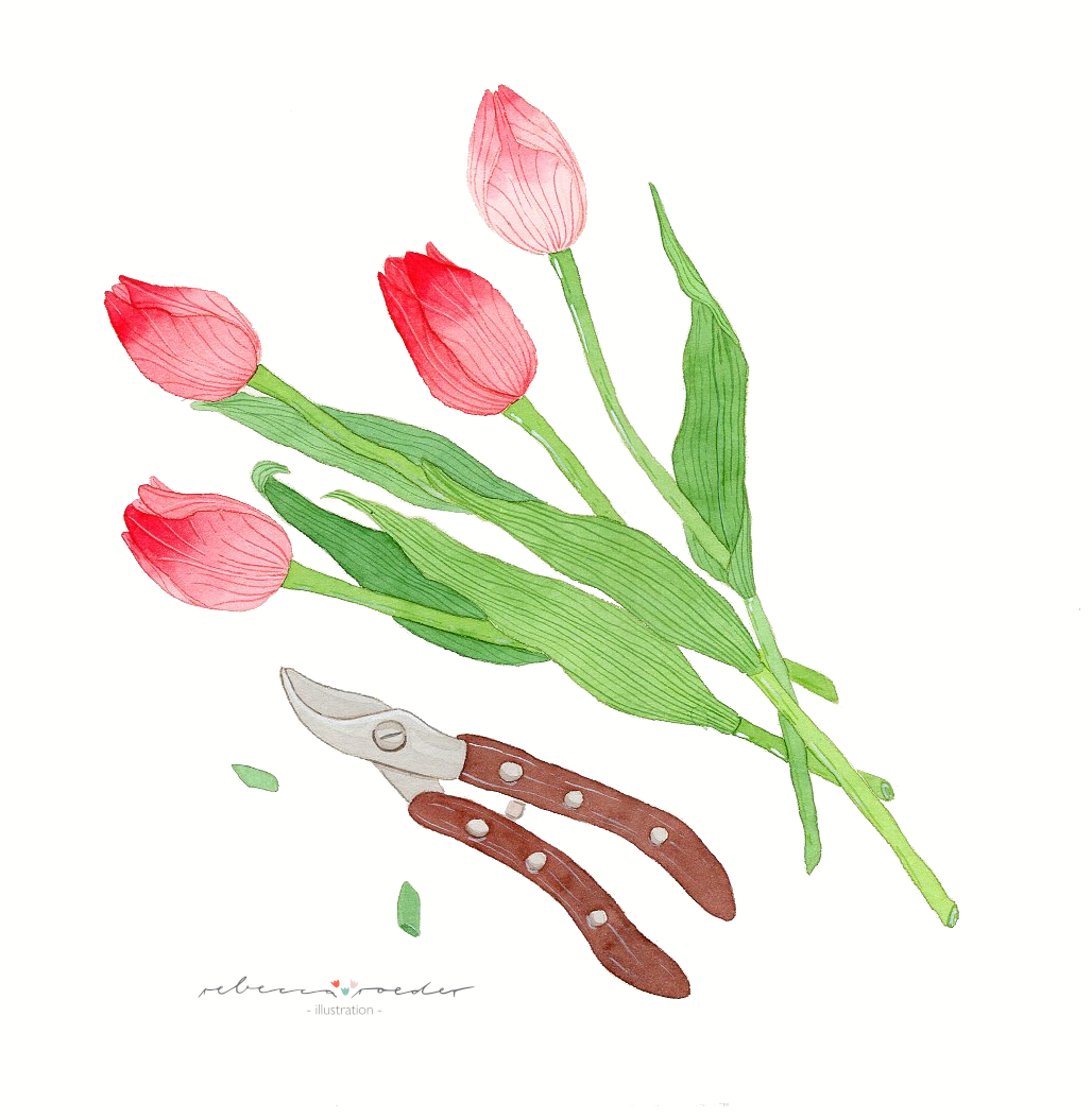 Tulpen.png