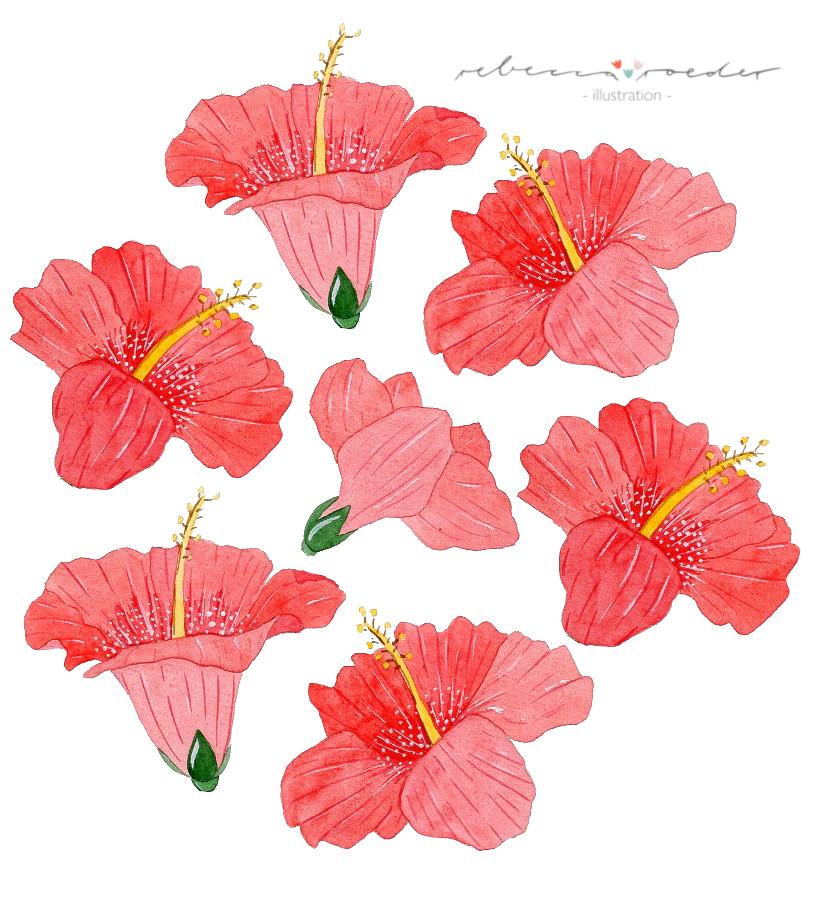Hibiscusblüten_web.png