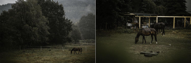Fotograf+ślubny+bielsko+biała+1.jpg