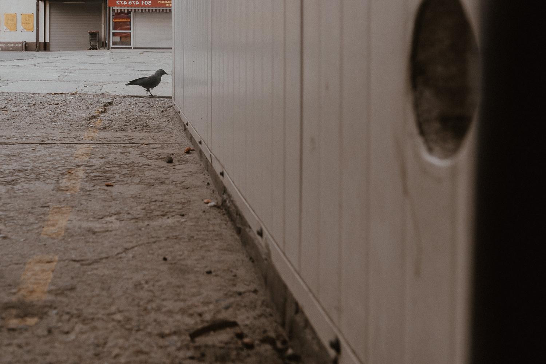 Fotograf krakow nowa huta  (16 of 17).jpg