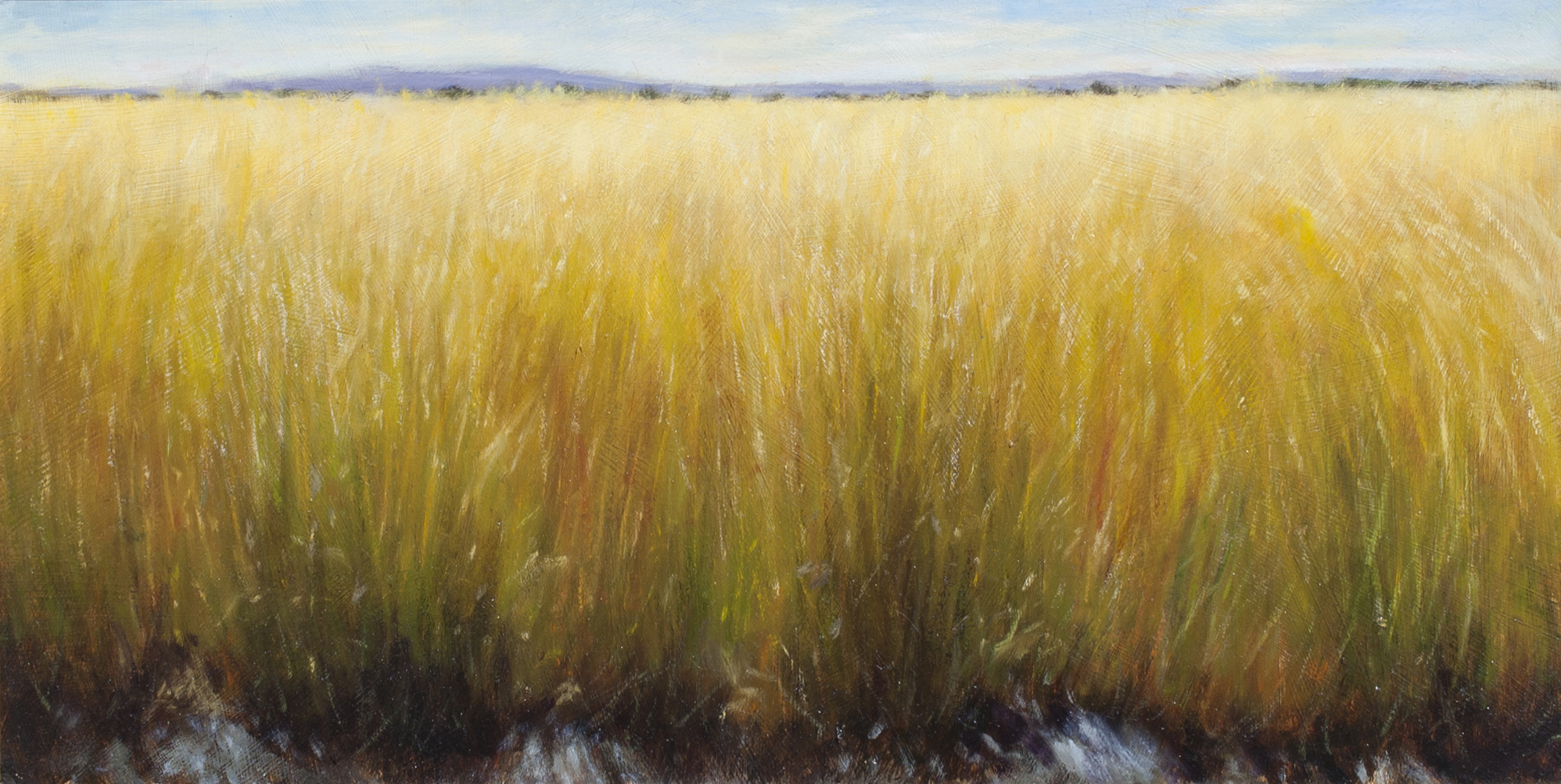 "The Edge of the Grass • 13"" x 25"" • Oil"