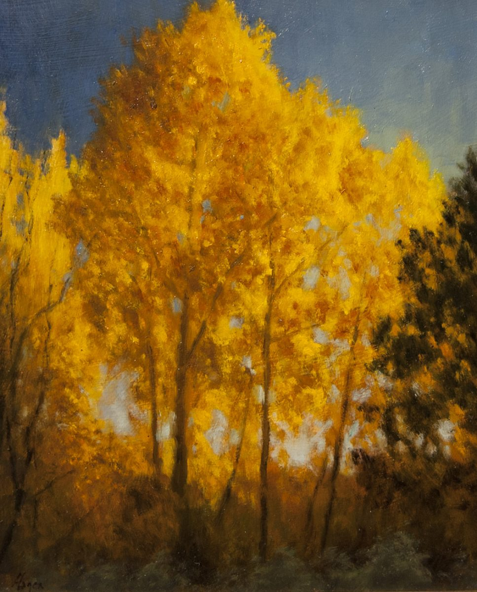 "Evening Aspens • 11"" x 14"" • Oil"