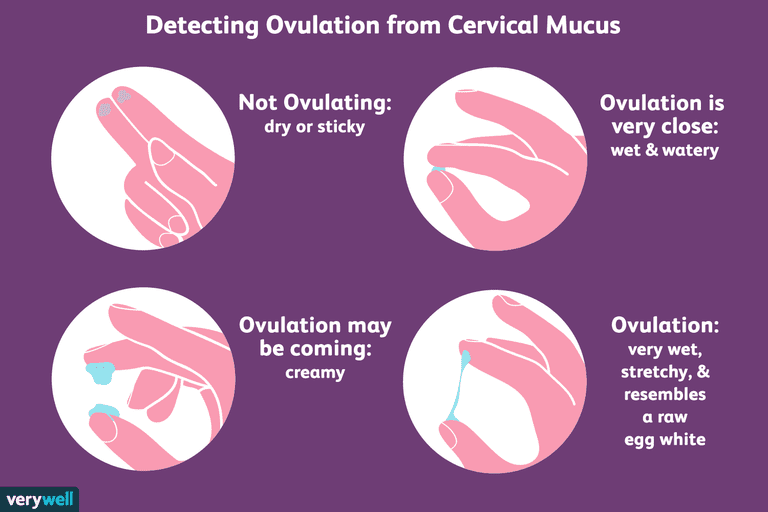 ovulation.png