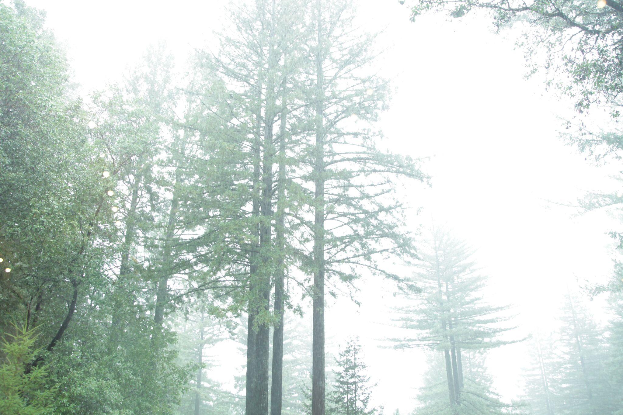 mRetreat_woods.JPG