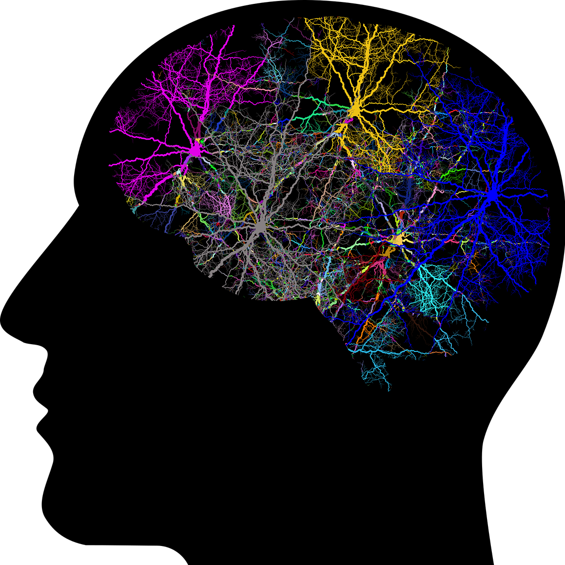 brain_1.png