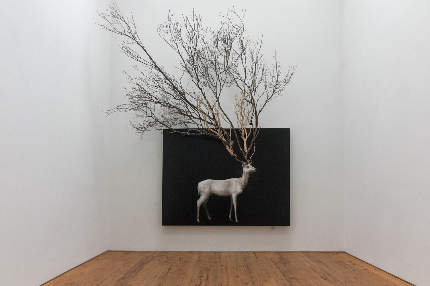 Todd Murphy,  Samuel (Stag with branches) , 2016, mixed media (oil on plexiglas with archival digital print and branches), 74 x 96 inches (branch dimensions variable)