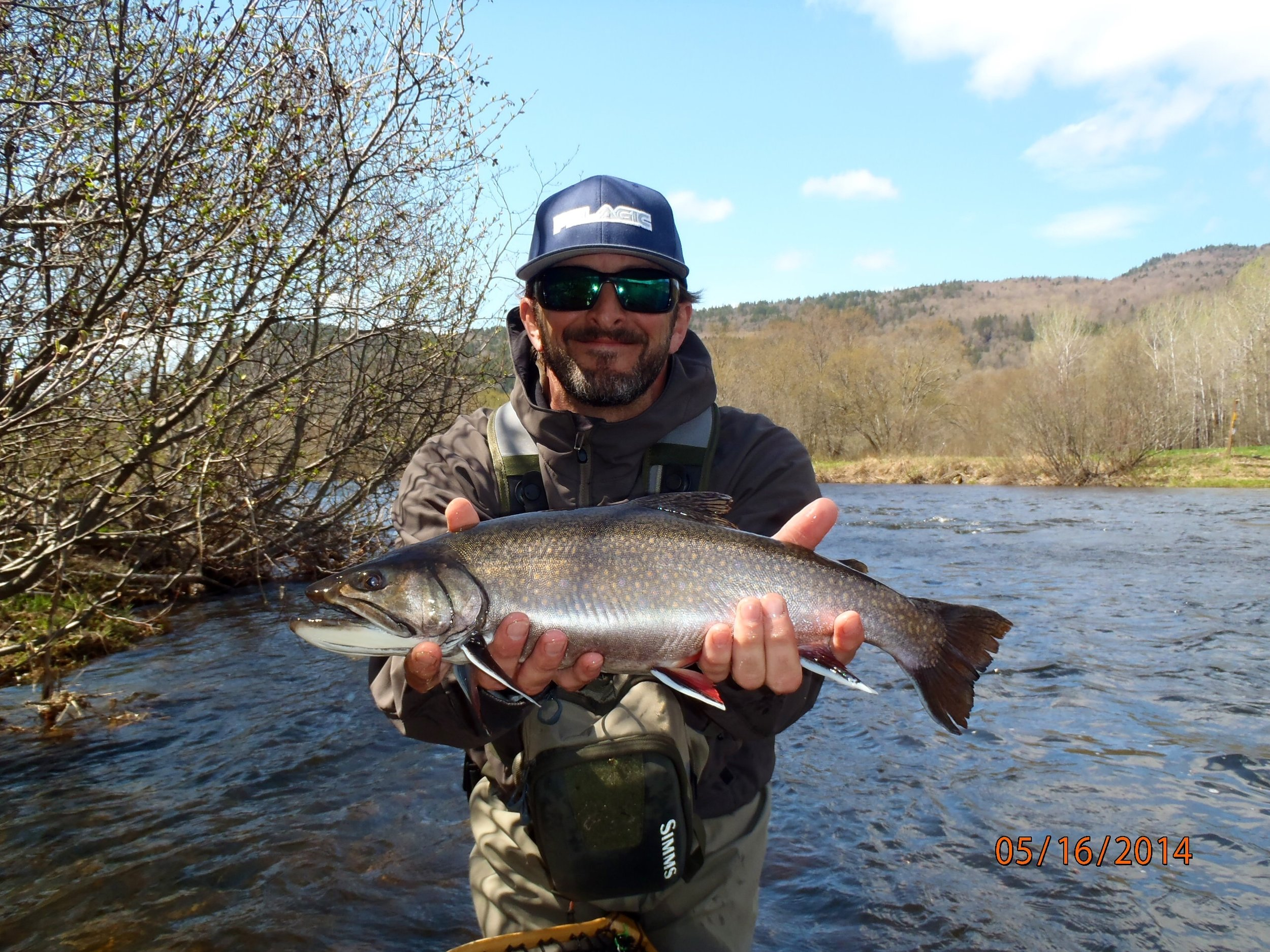 wild Maine brook trout