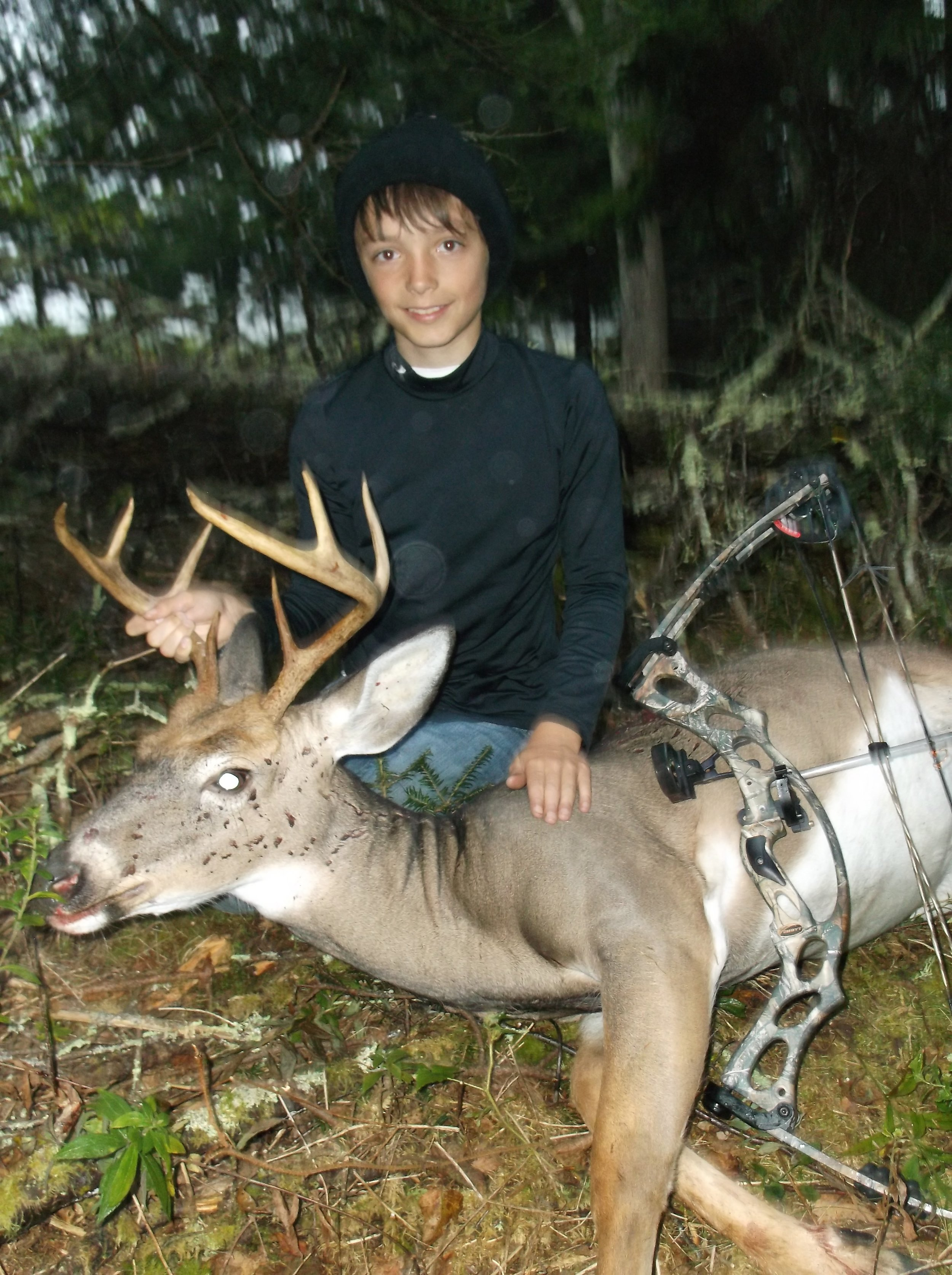 White tail deer, youth bow