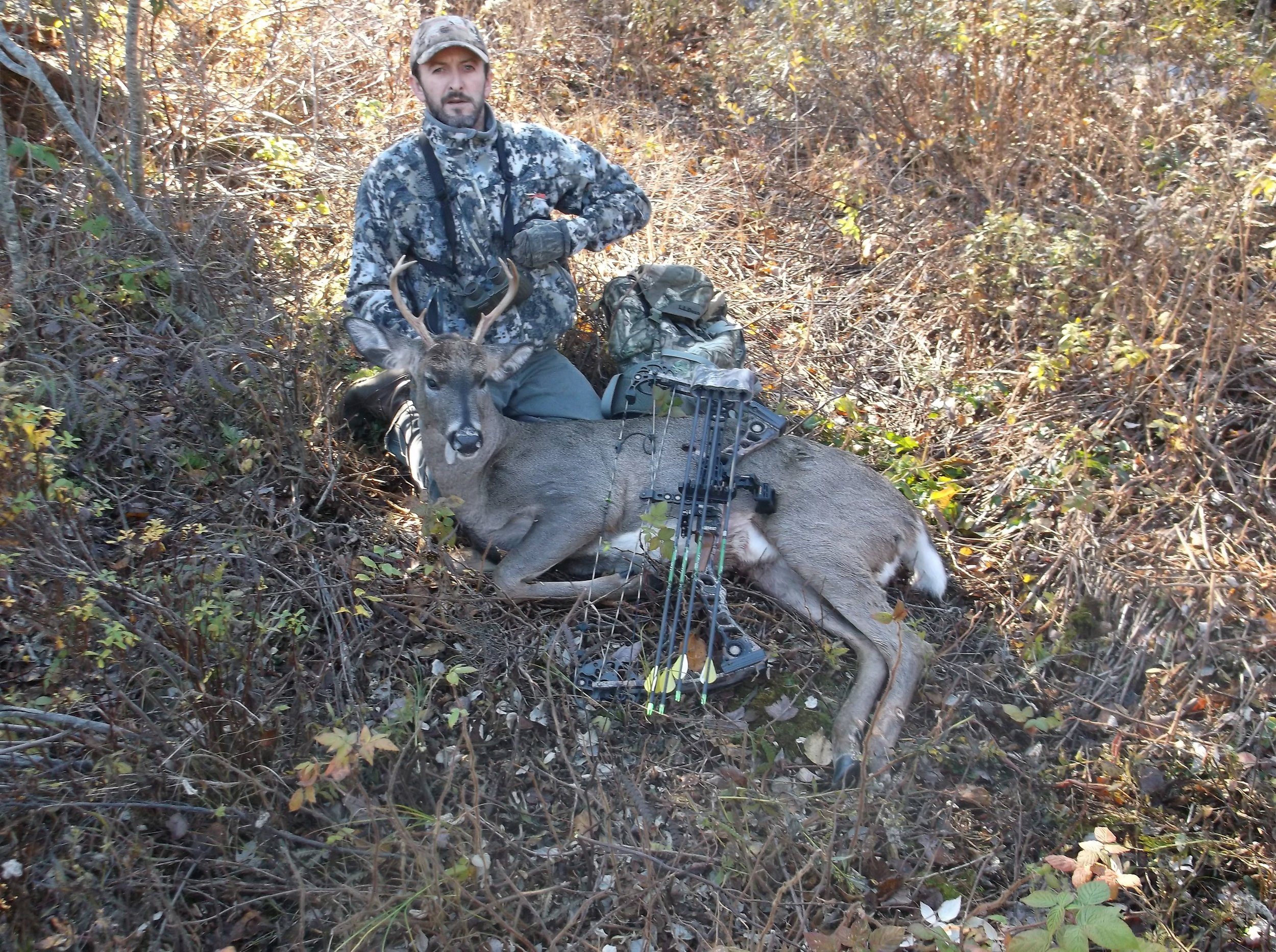 white tail deer bow hunt