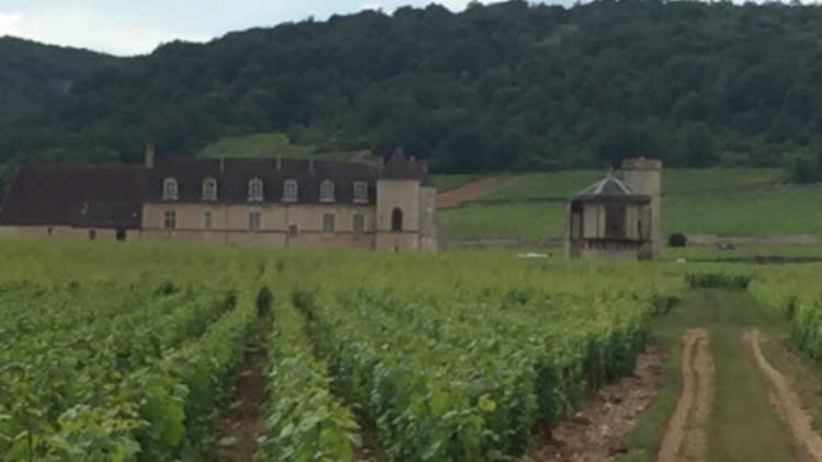 Clos Vougeot and Chateau.JPG