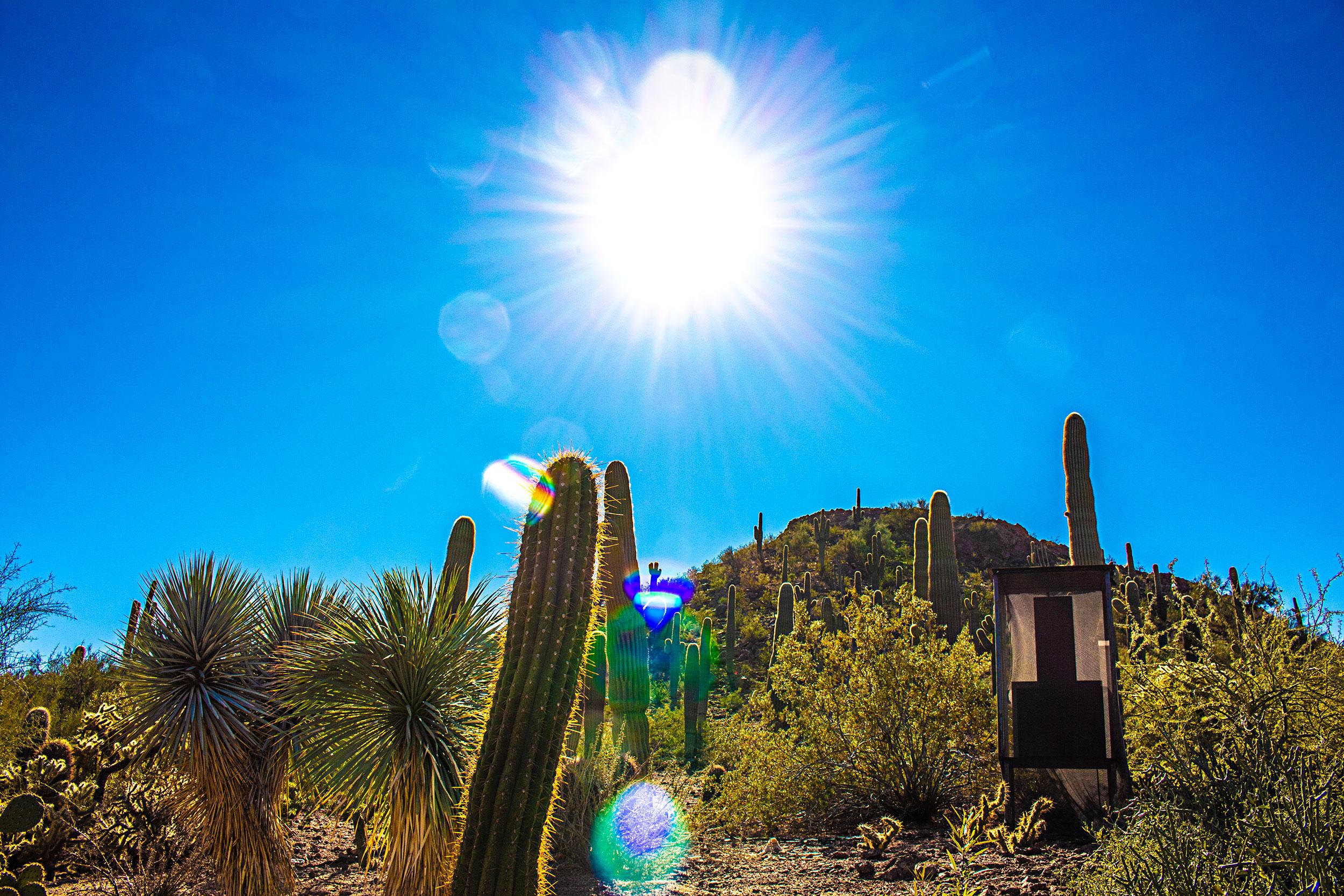 Desert-Botanical-Garden-Sun.jpg