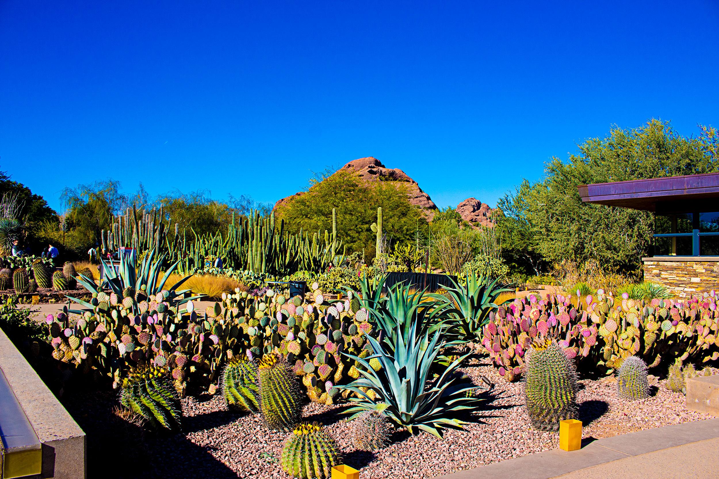 Desert-Botanical-Garden-Succulents.jpg