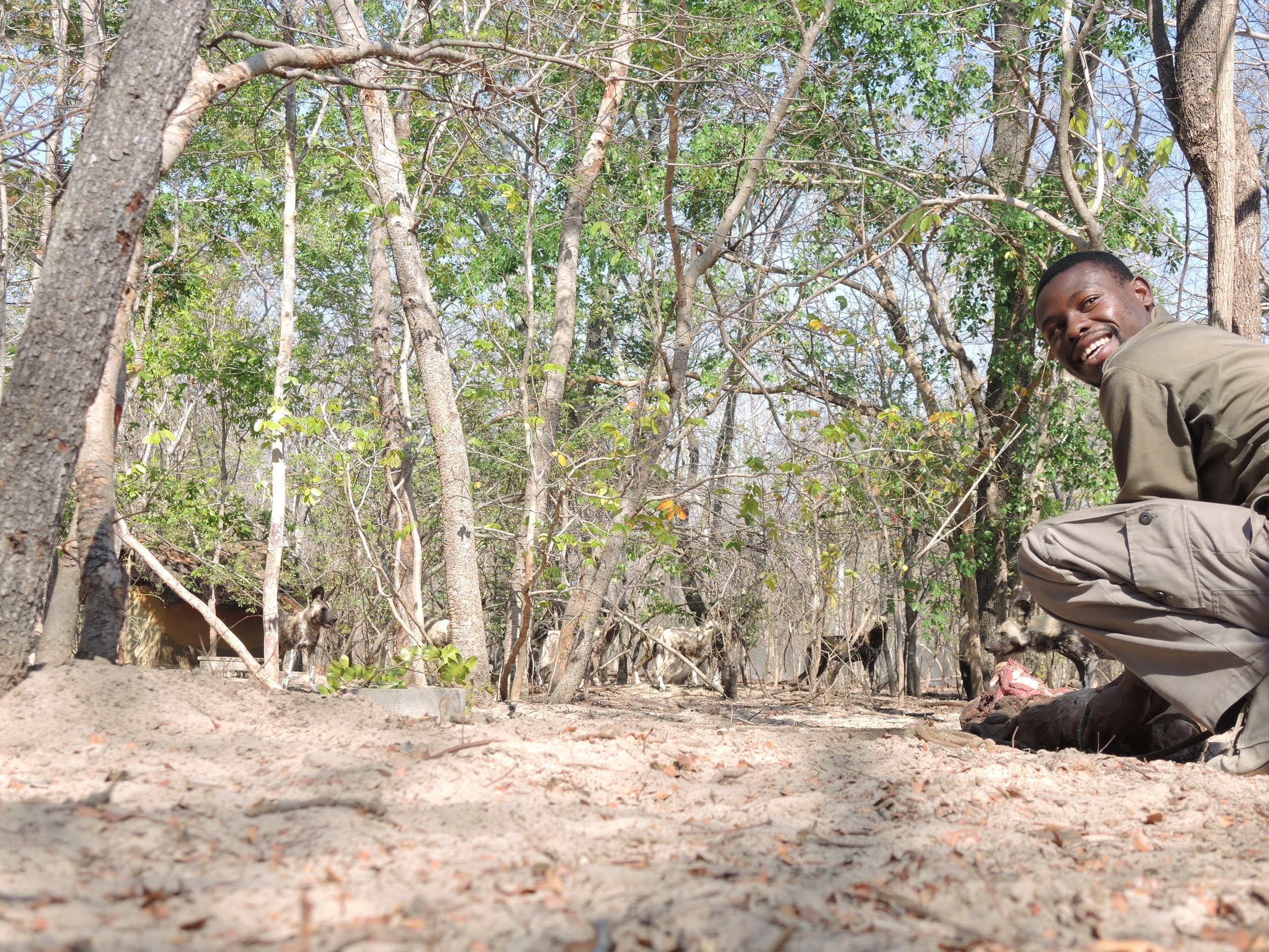 Shepherd Phiri preparing a meal for painted dogs at the Rehabilitation Facility