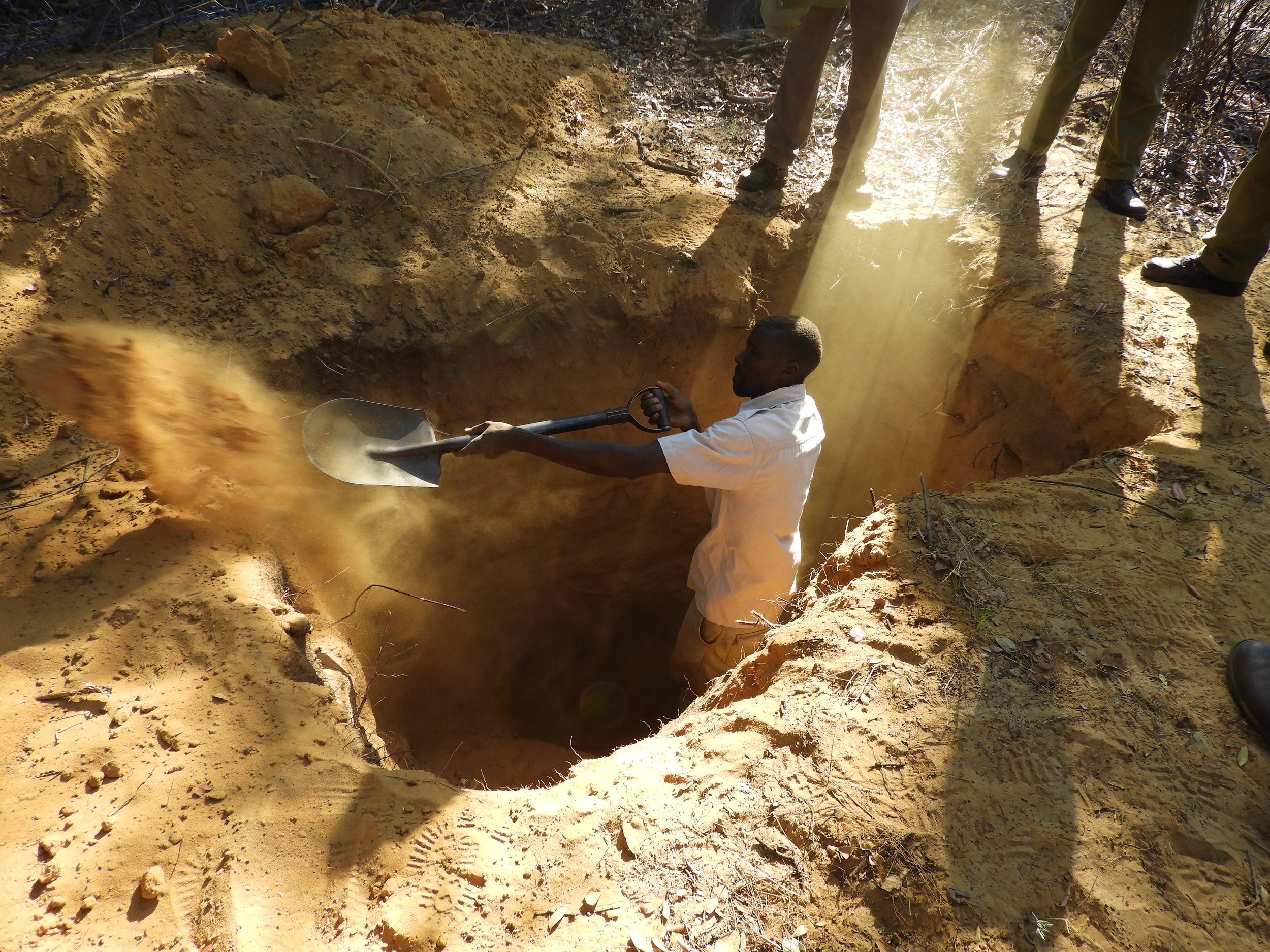Moyo helps dig out the pups from the den in Mpindo