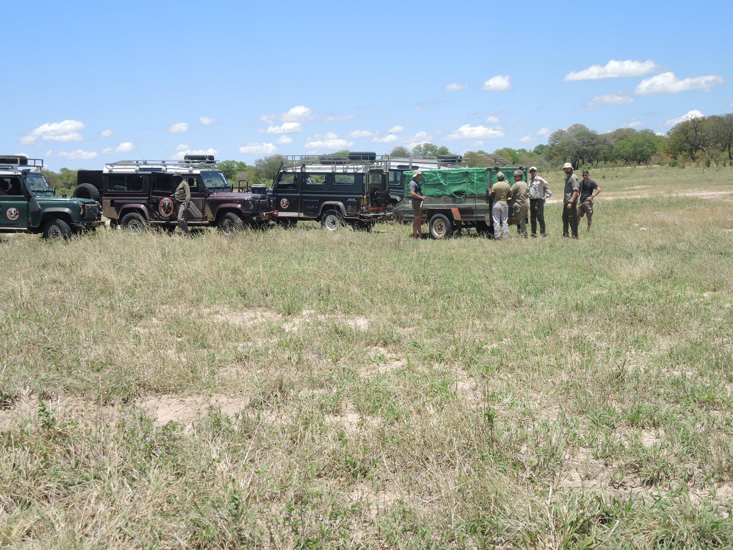 Releasing the Mpindo pack at Jambili pan inside Hwange National Park: December 2018