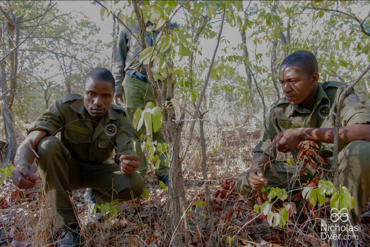 Lephias, on the left, has been recognised for his dedication and is the recipient of The Paradise Found African Ranger Award.