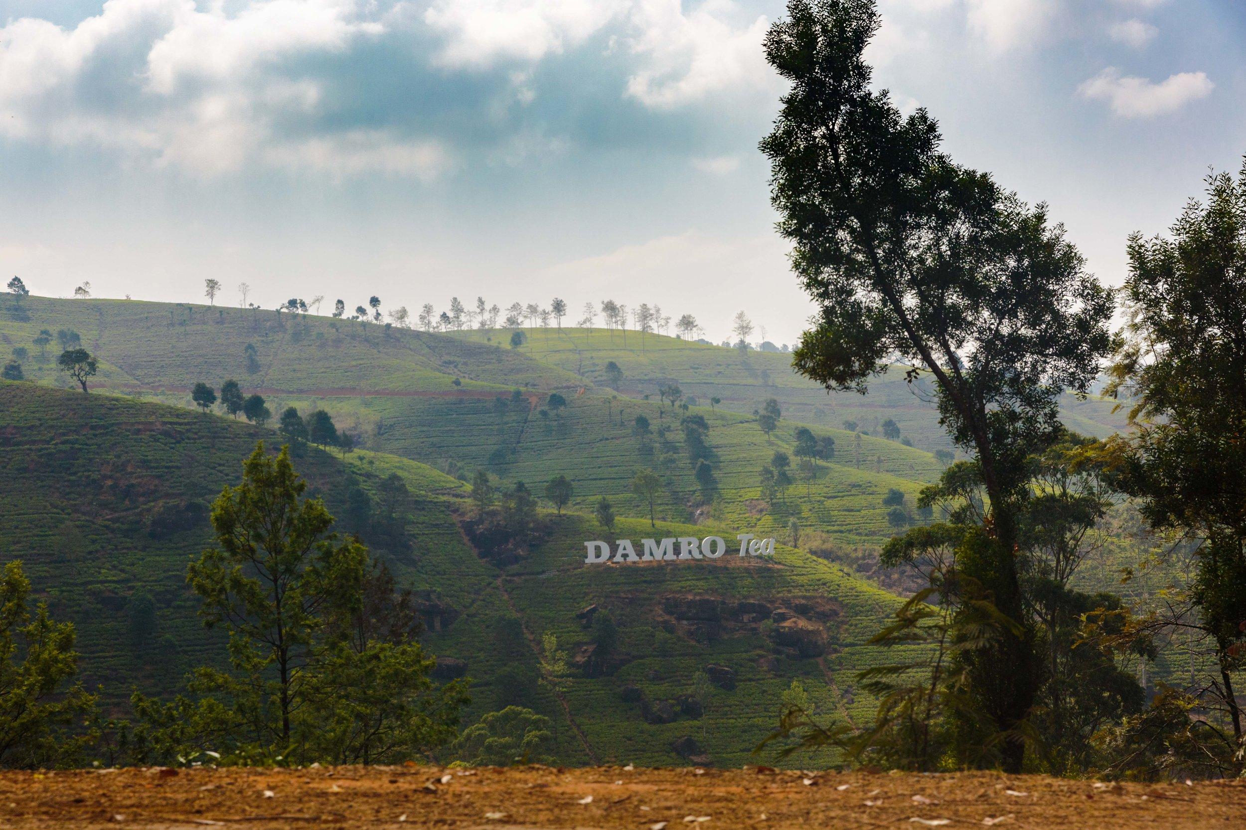 Tea Plantations everywhere!