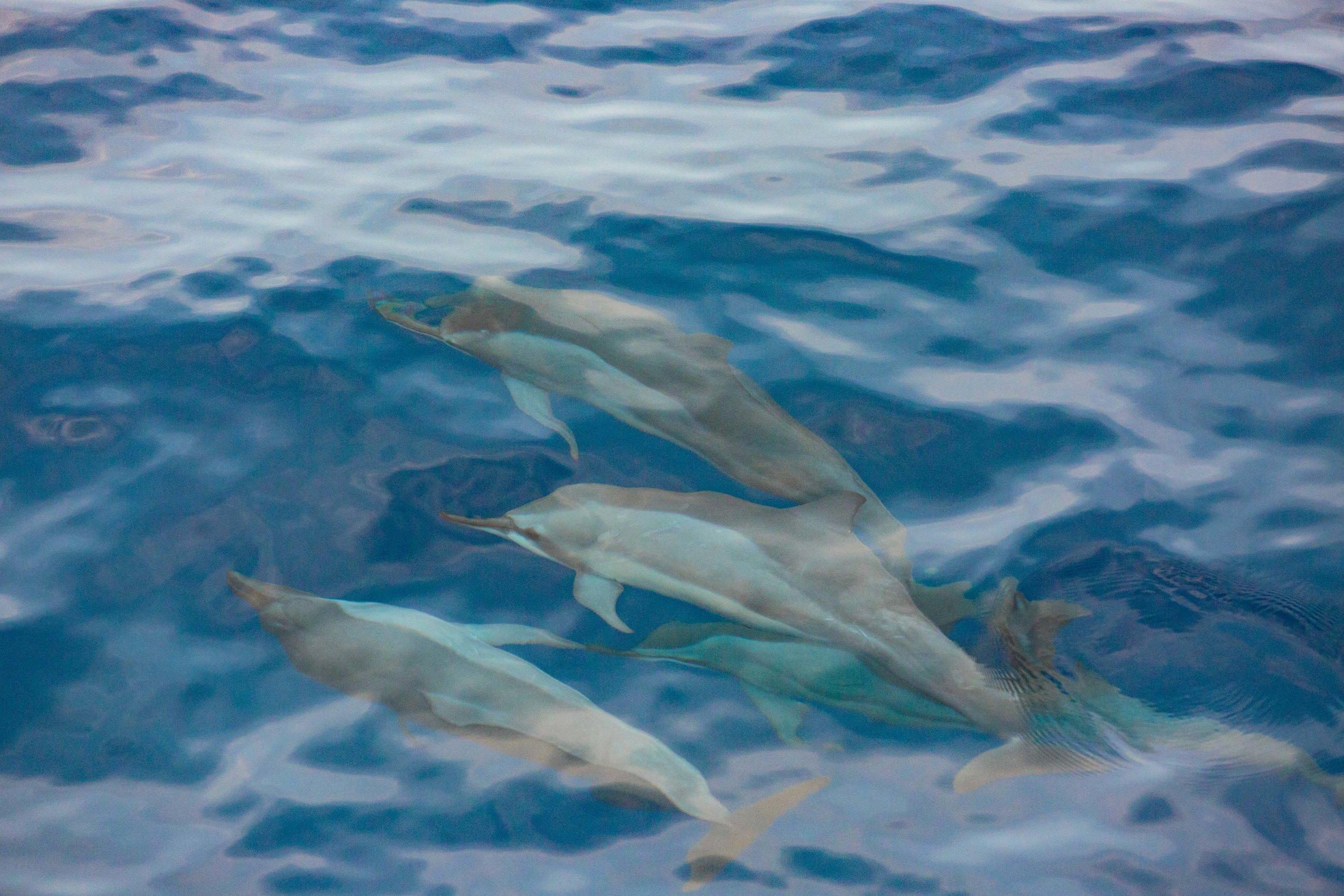 Underwater dolphins.