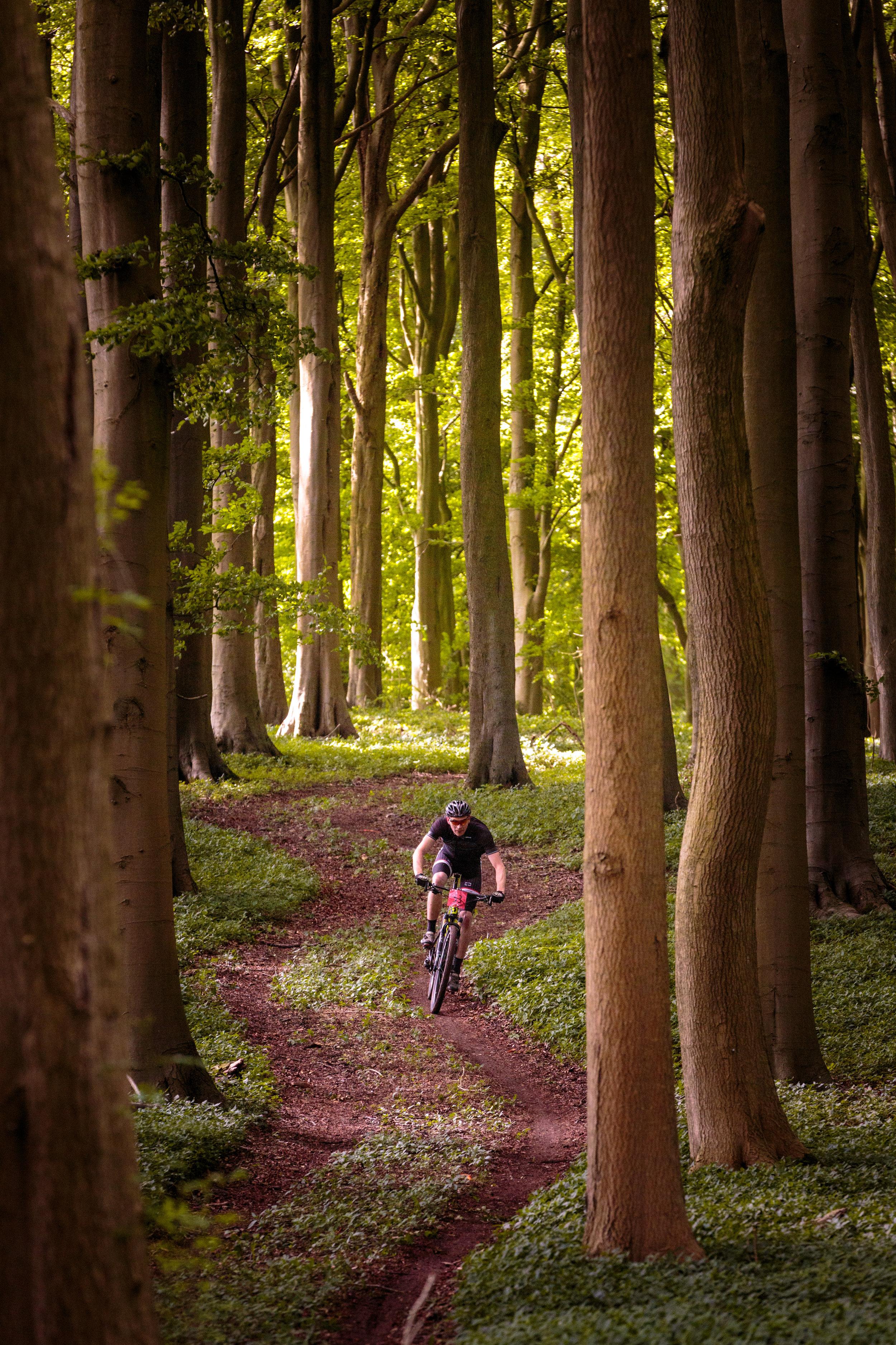 Mountain Bikers Between Trees