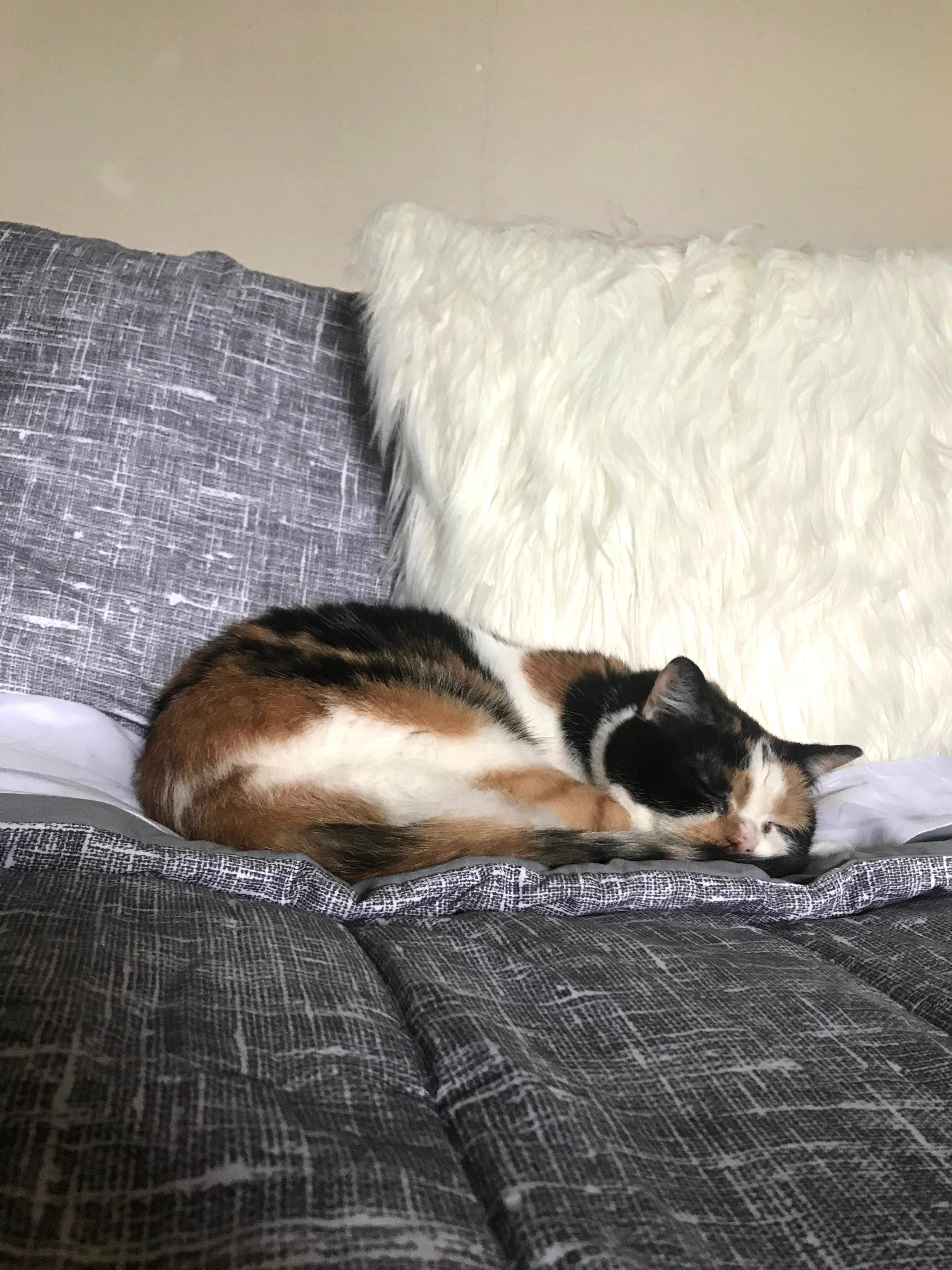 Murphy being a perfect angel sleeping girl