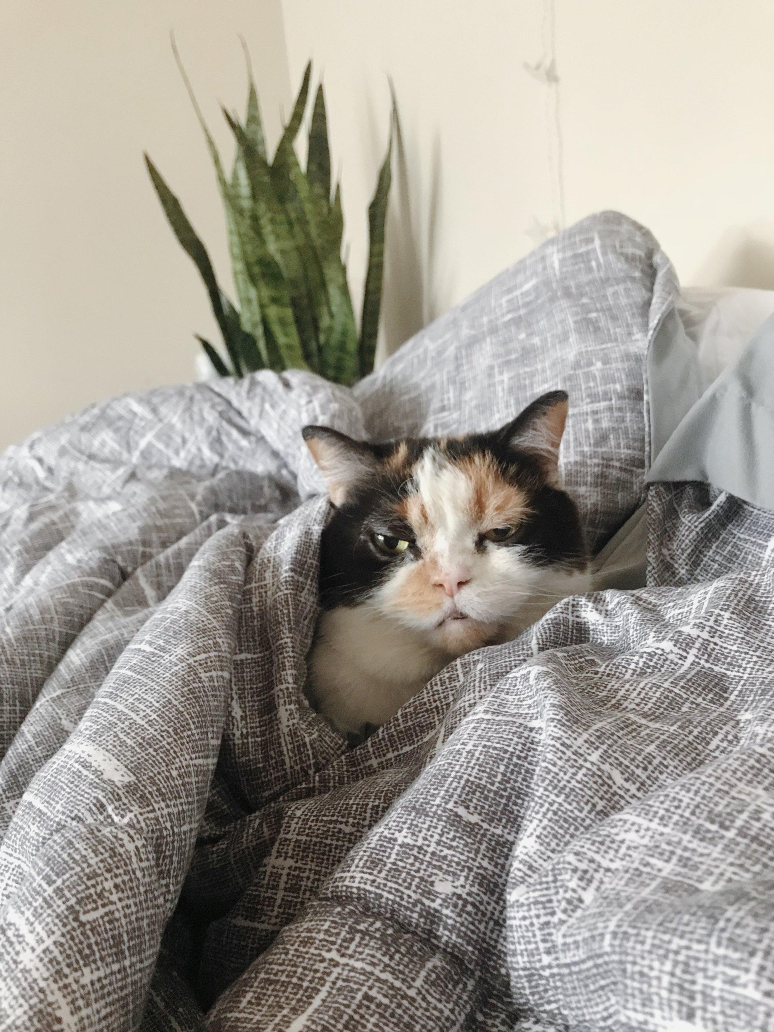 Murphy being grumpy from being woken up