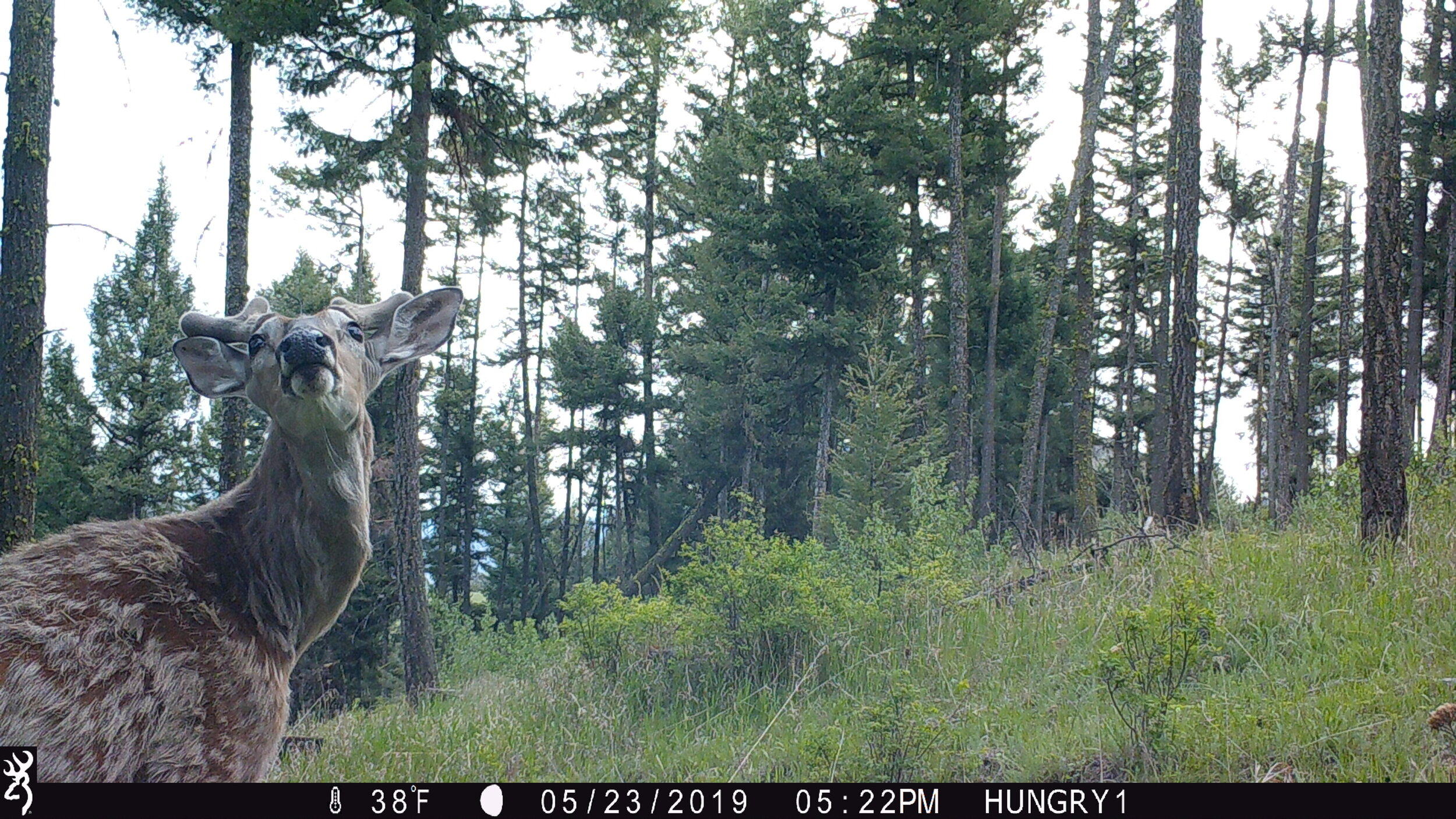Trail Cam Pics Trail Cam Review Best Trail Cam 2019 Browning Trail Cameras