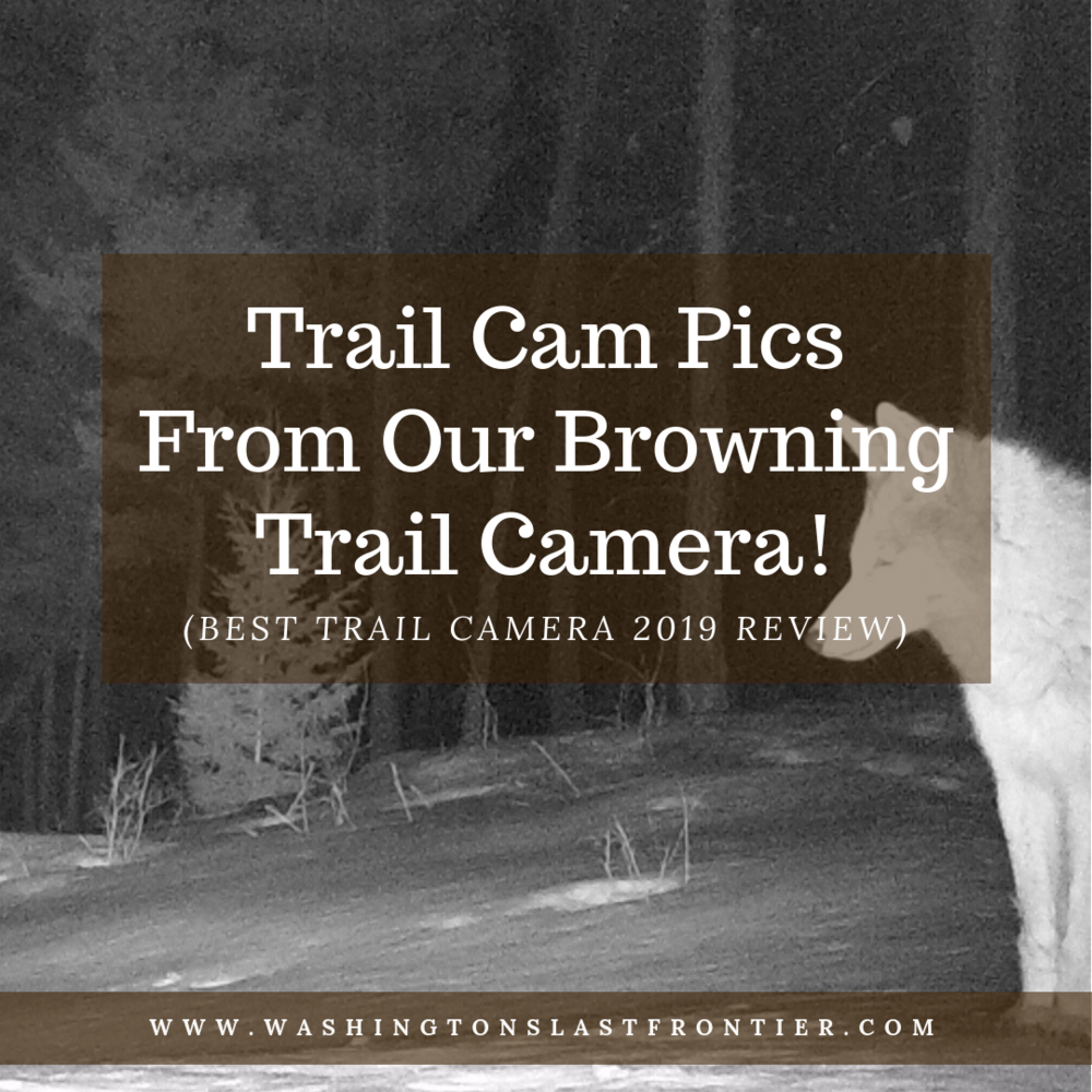 Trail Cam Pics From Our Browning Trail Camera! (Best Trail Camera 2019 Review)   EMBEDDED SCRIPTS