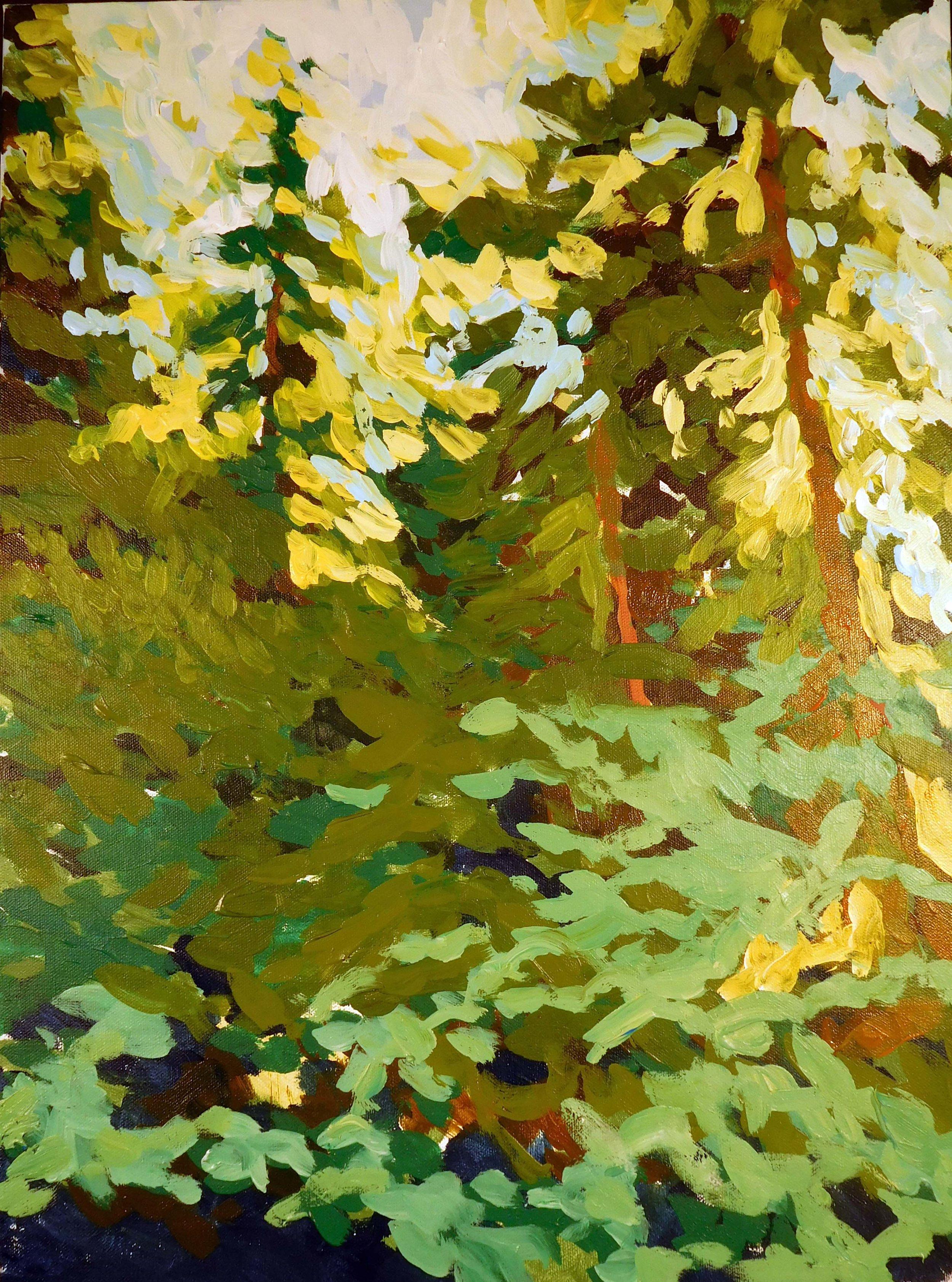 Vancouver Pines.jpg
