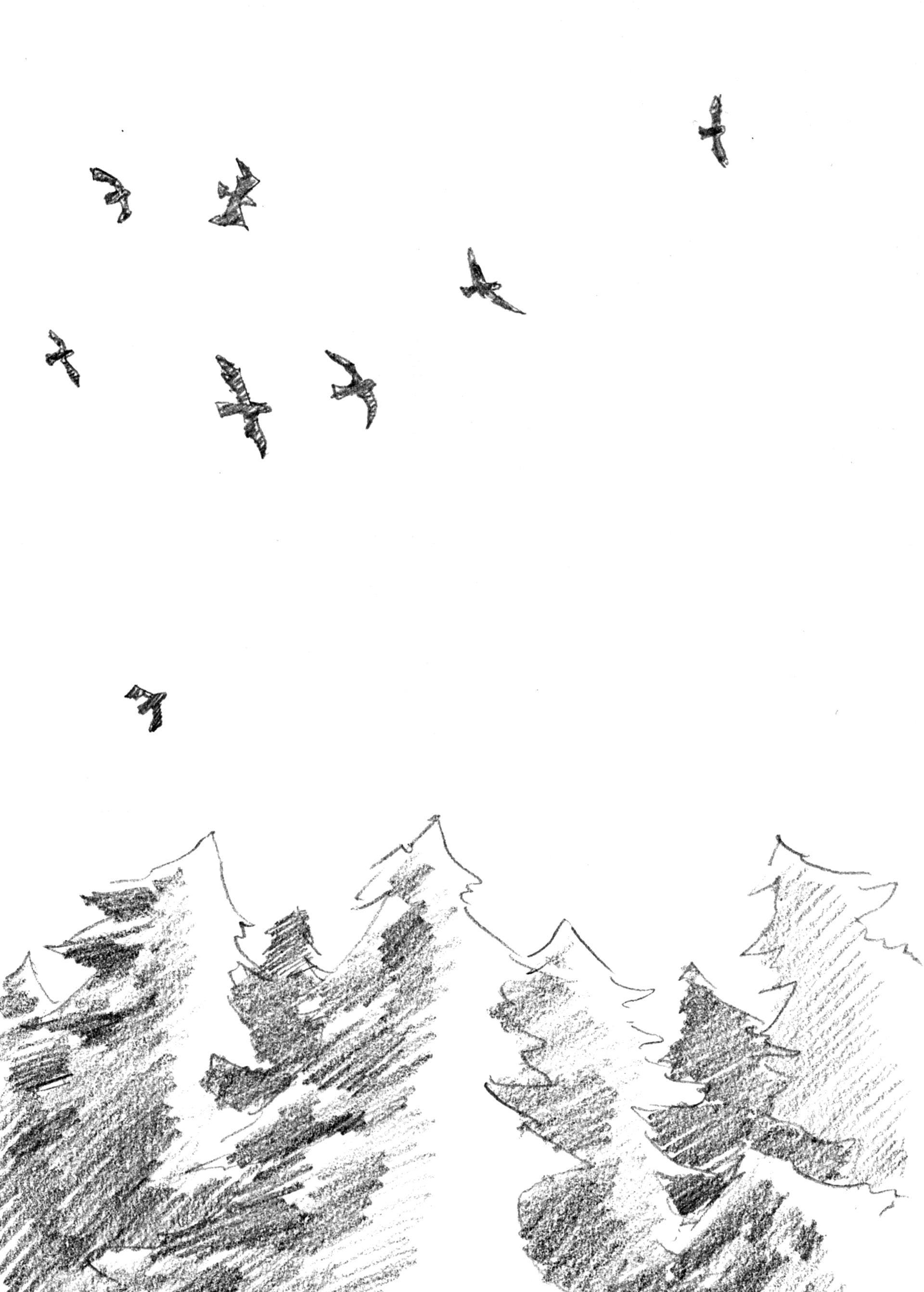 BirdsAndTrees.jpg
