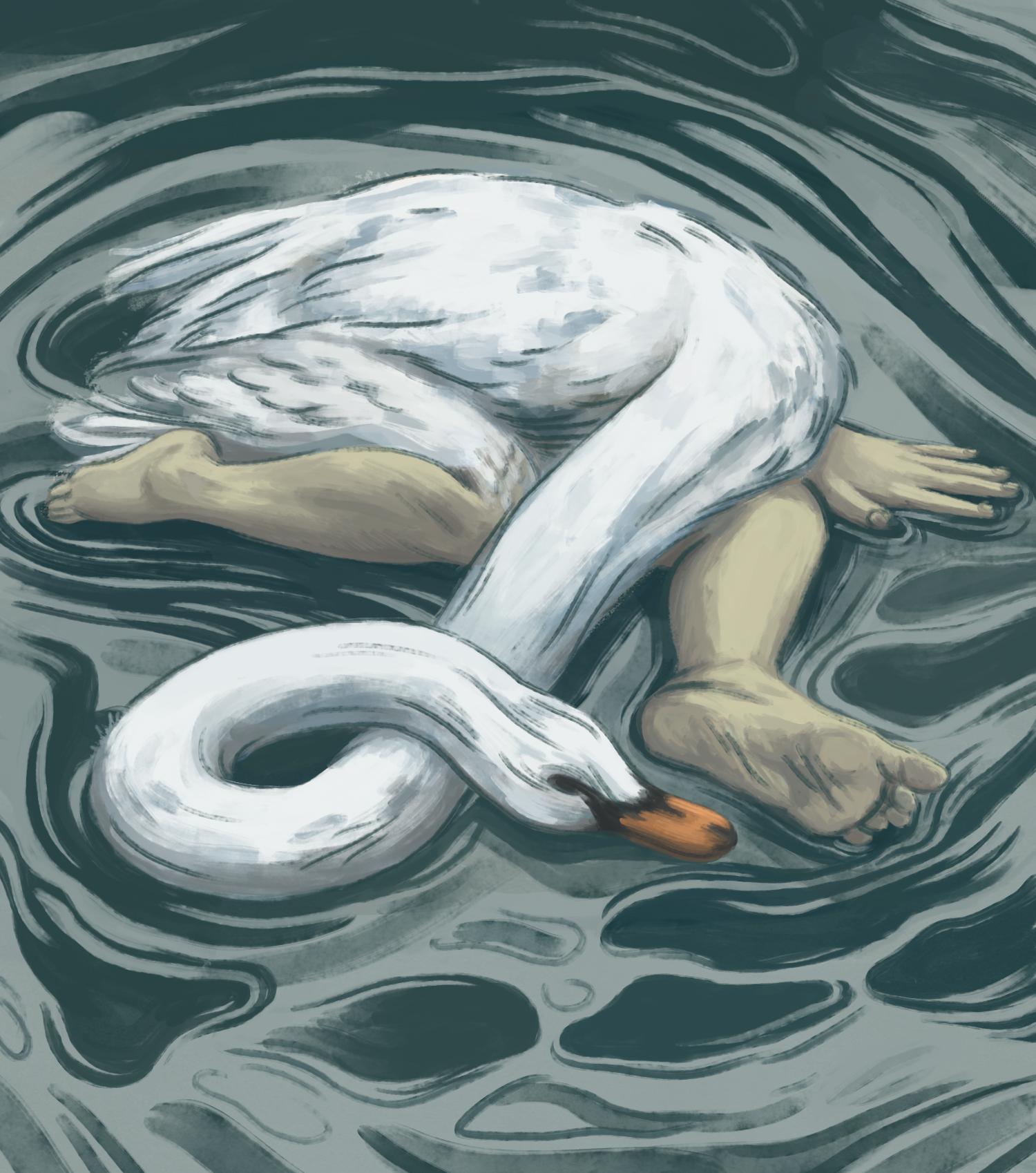 swan lake?2.jpg