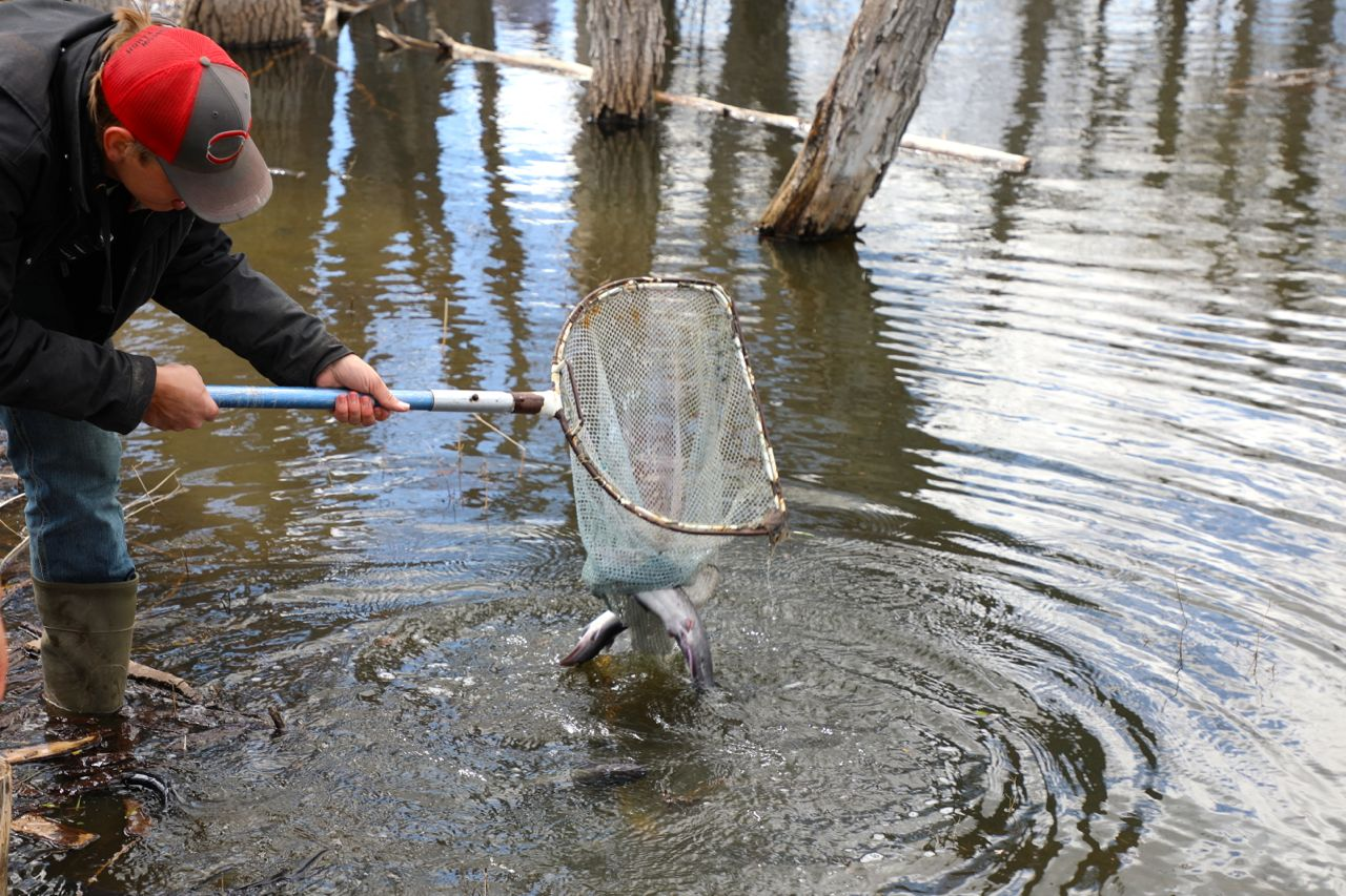 """Sure fun! We are so excited to have great fishing again as part of the activities for our campers at Rainbow Bible Ranch . Bass, Catfish, Trout and lots and lots of minnows. The minnows not only """"feed"""" the other fish, they also prove to be very valuable in mosquito control."""