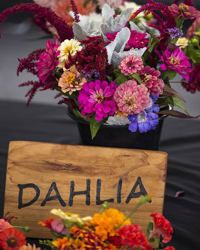 Always love going to the @chicofarmersmarket  #🌼 #shoplocal . . . #farmersmarket #saturdayfun #autumnvibes🍁 #autumniscoming #goodbyesummer #dahlias